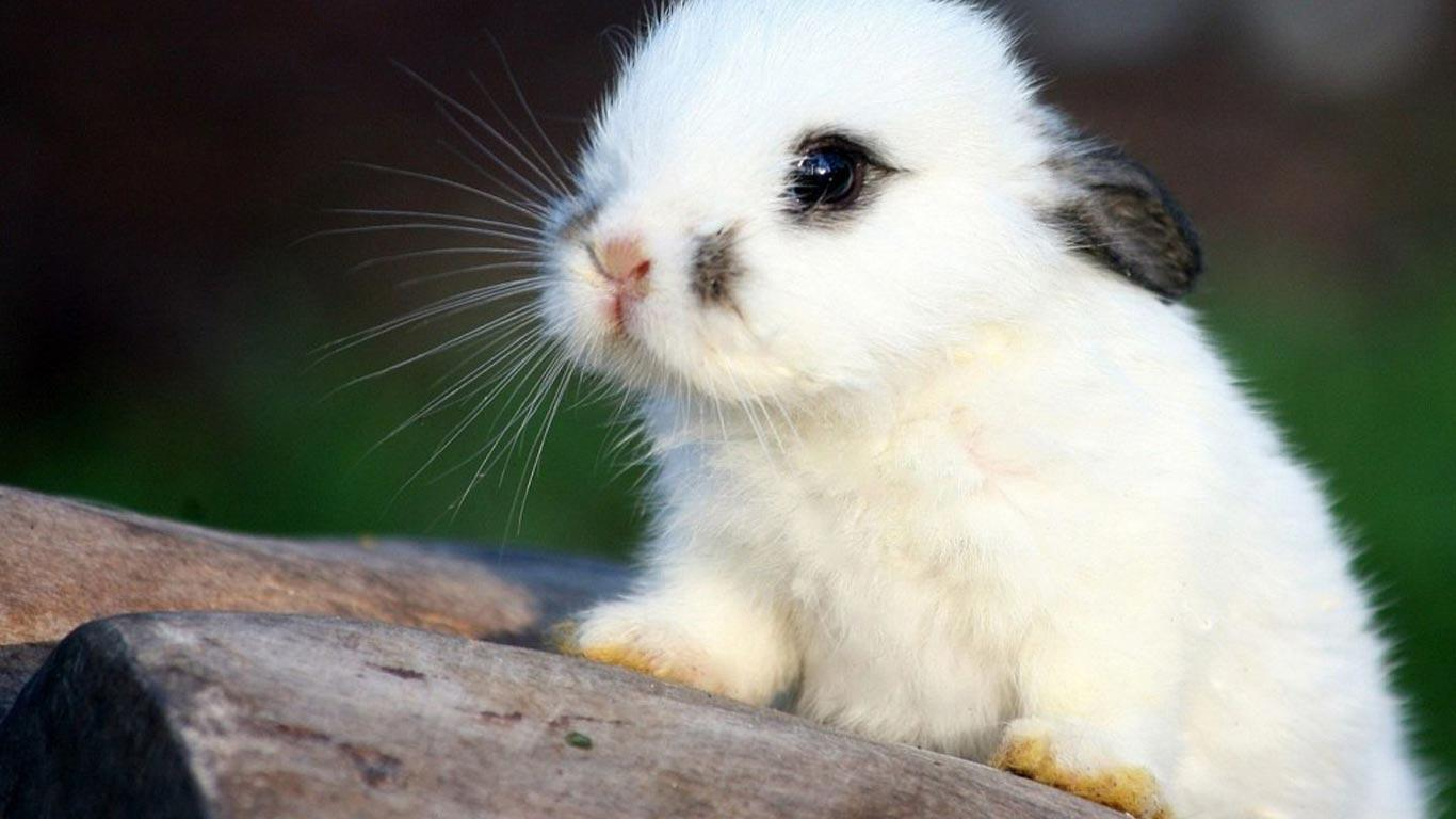 cute bunny wallpapers wallpaper cave