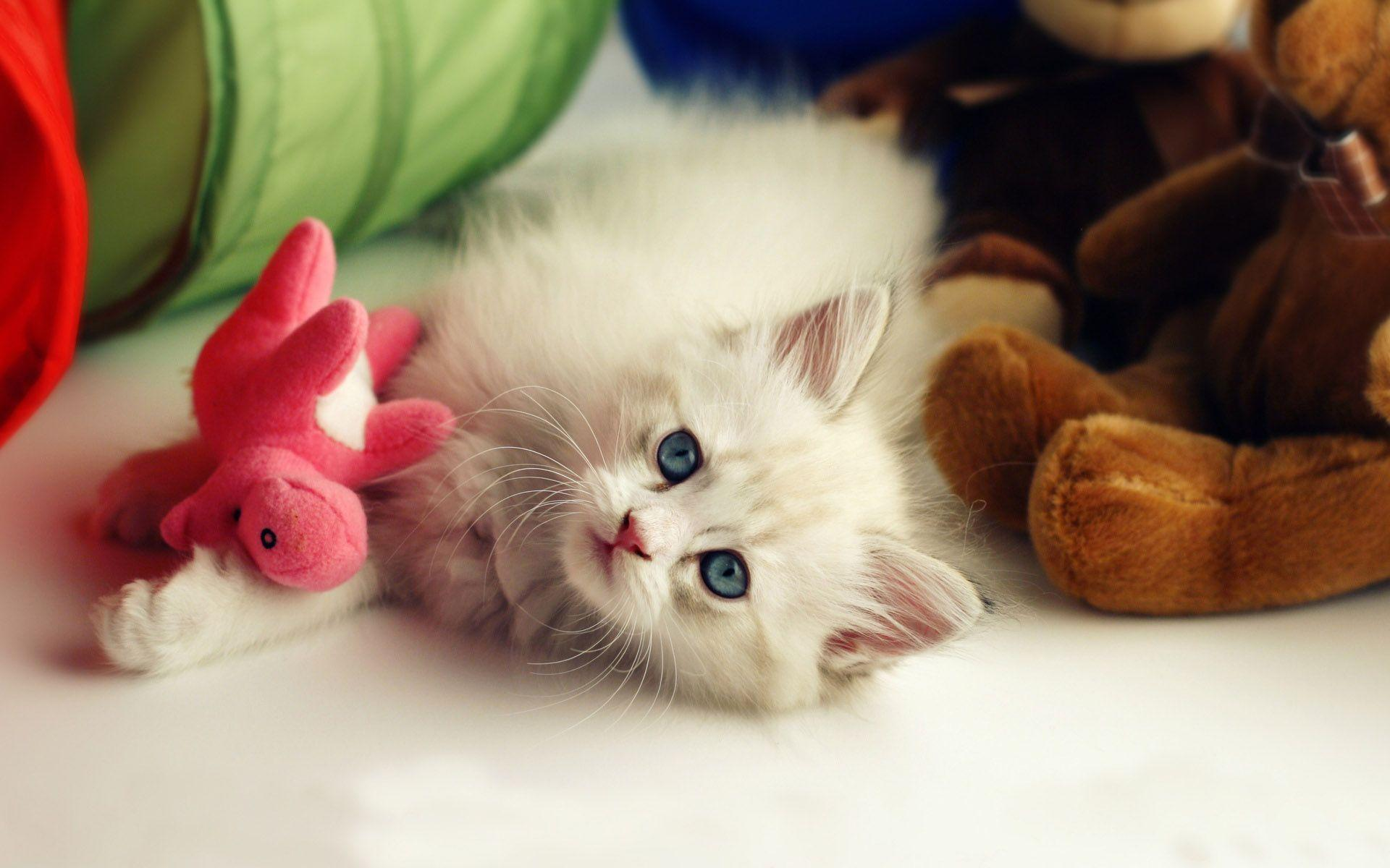 hd wallpapers of cute cats - photo #7