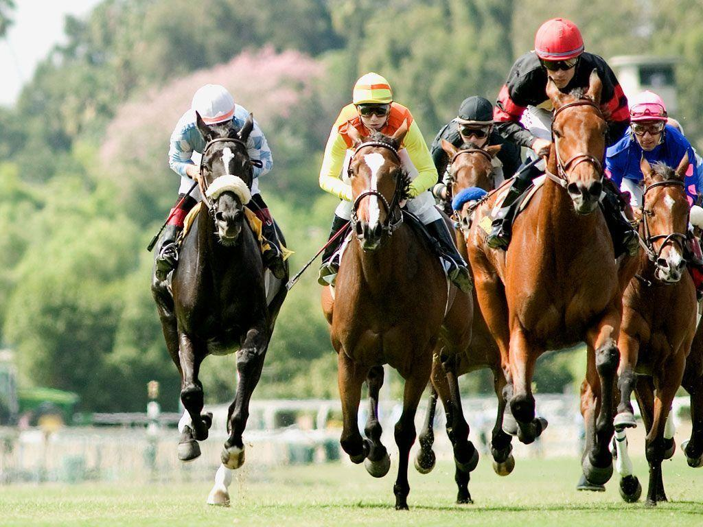 Horse Racing Wallpaper for computers.