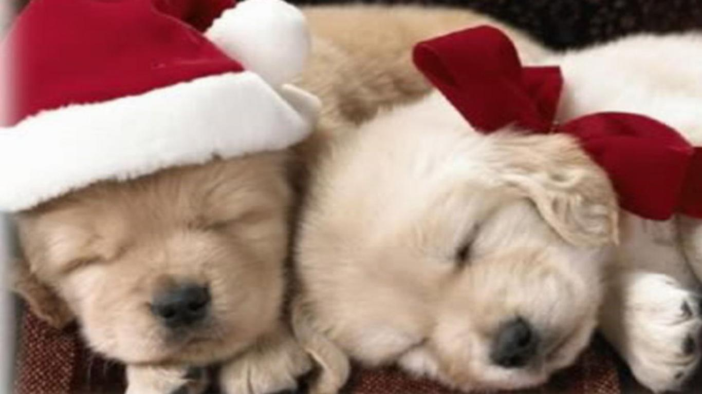 Puppy Christmas Wallpapers Wallpaper Cave HD Wallpapers Download Free Images Wallpaper [1000image.com]