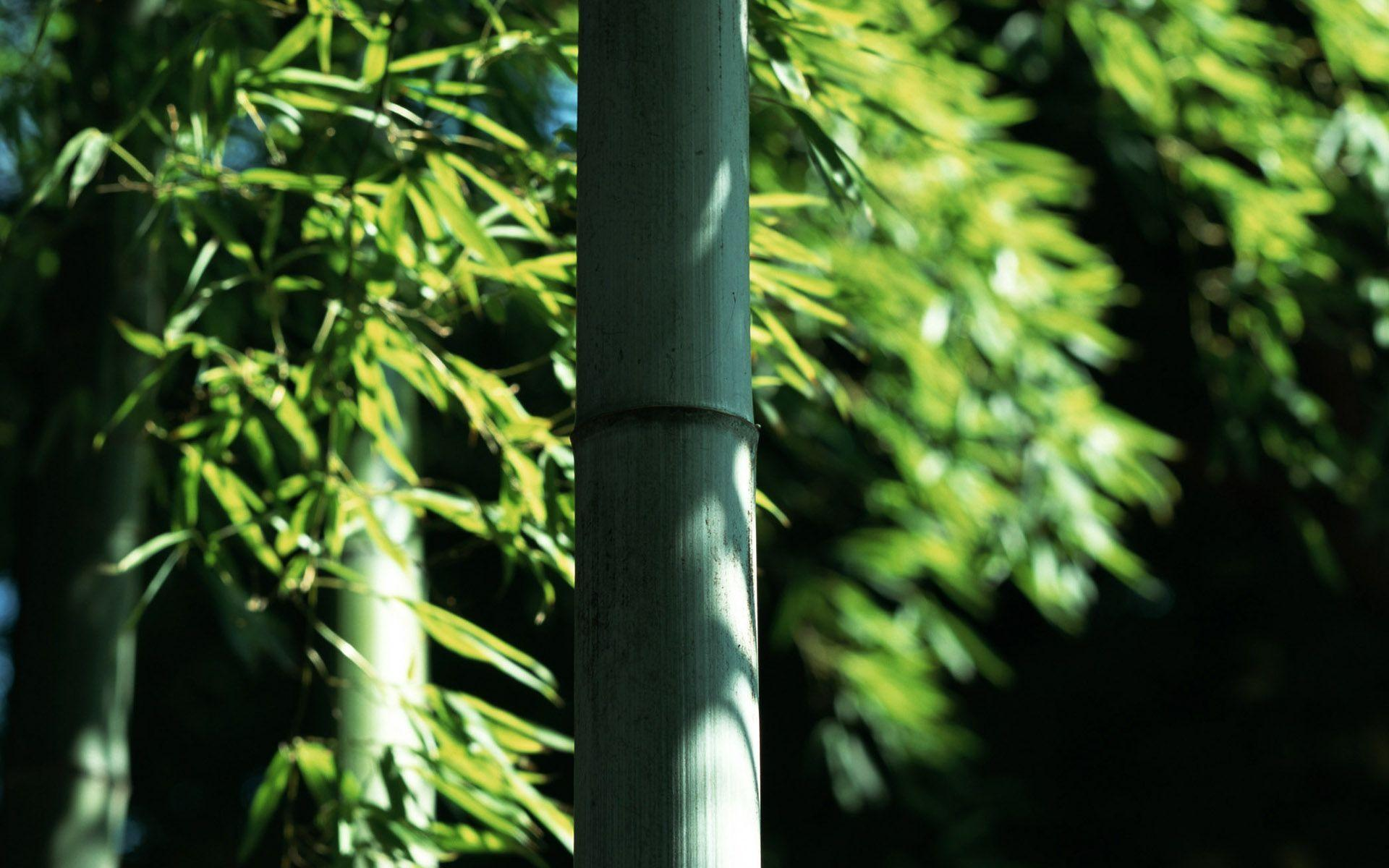 bamboo wallpaper by doantrangnguyen - photo #24