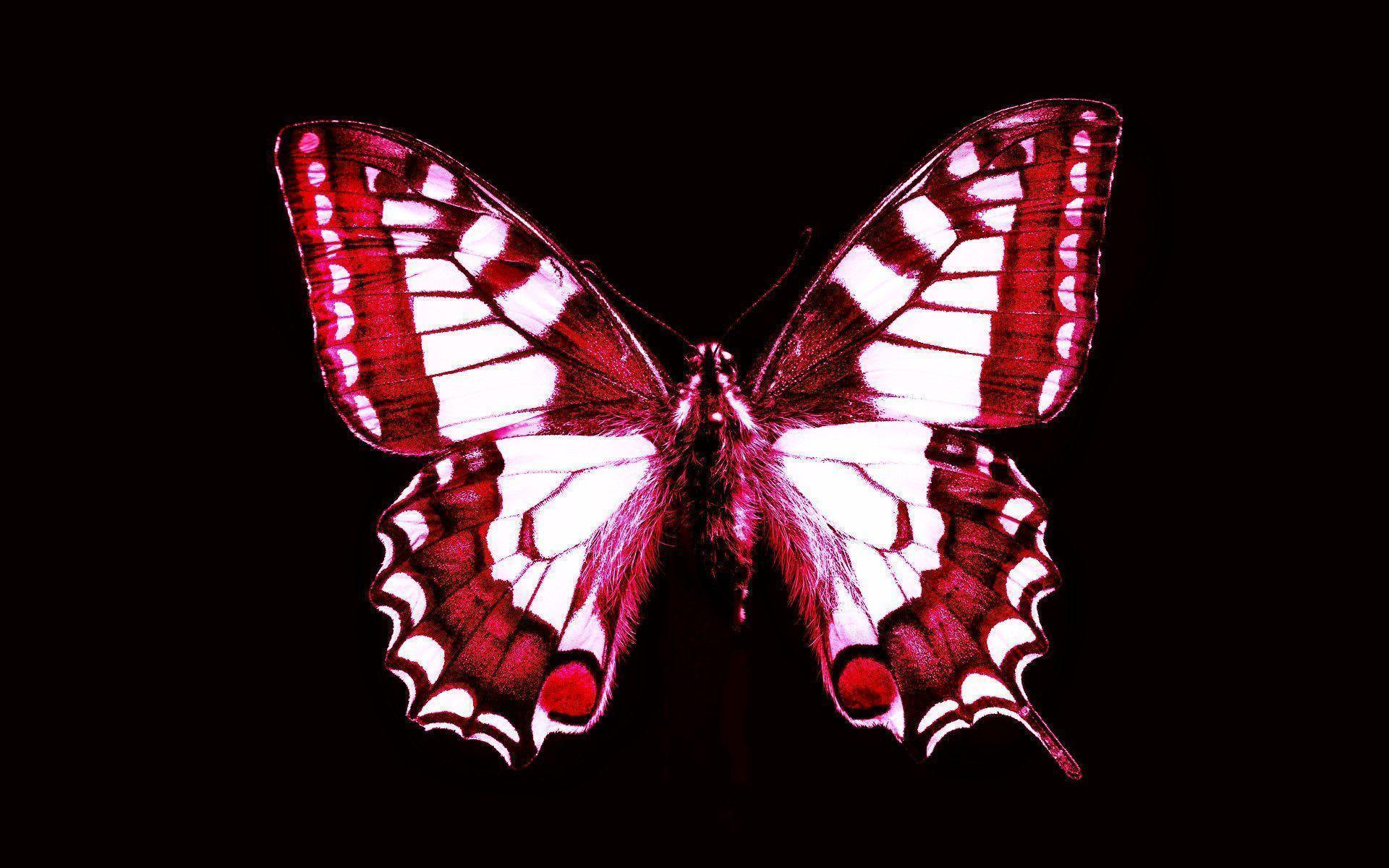 Red butterfly wallpapers wallpaper cave for Butterfly wallpaper for walls
