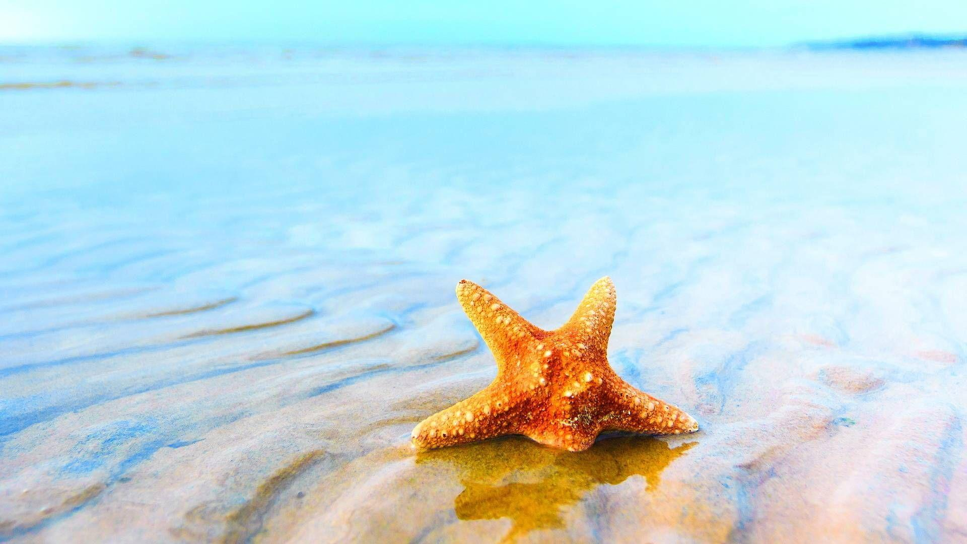 Starfish Wallpapers Wallpaper Cave HD Wallpapers Download Free Images Wallpaper [1000image.com]