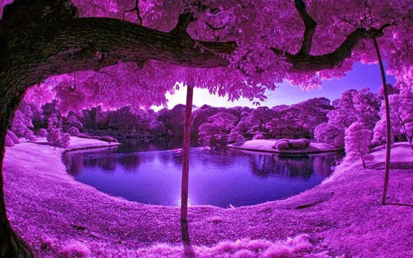 Purple Tree Wallpapers - Wallpaper Cave