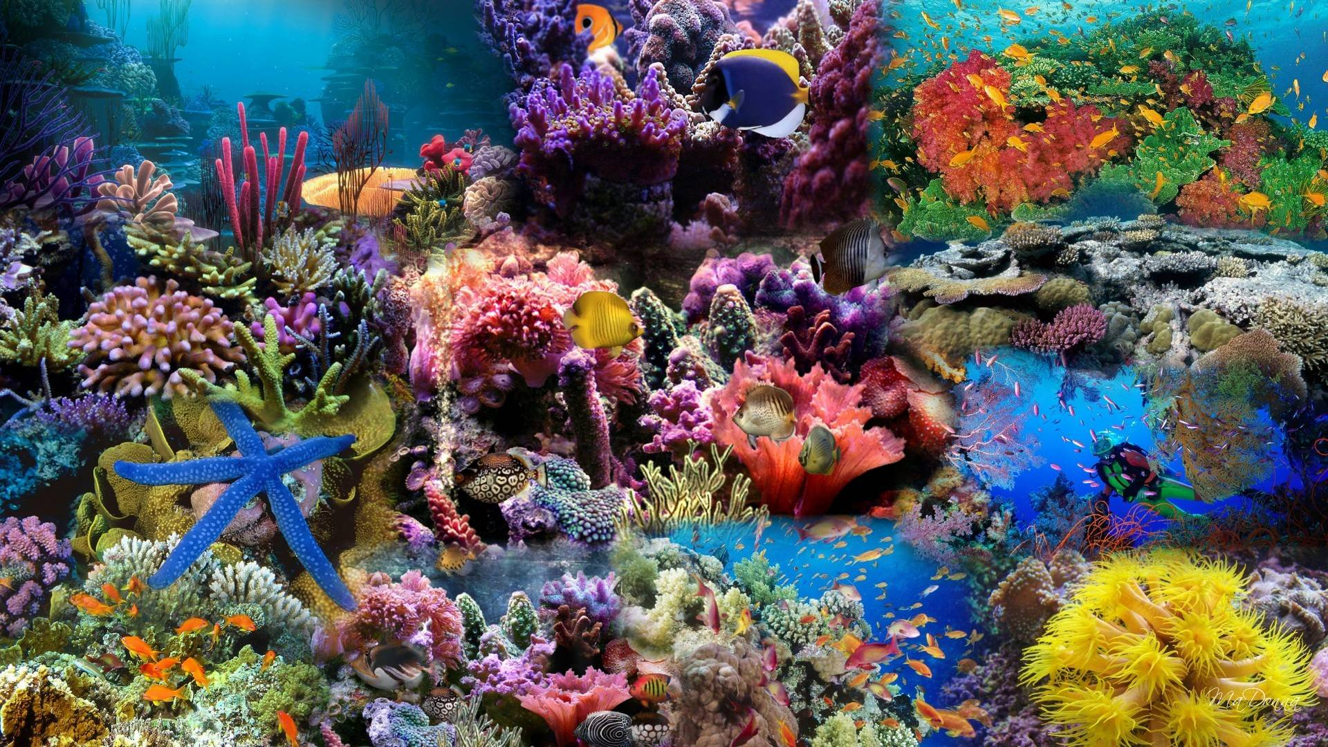 HD Aquarium Background Wallpaper