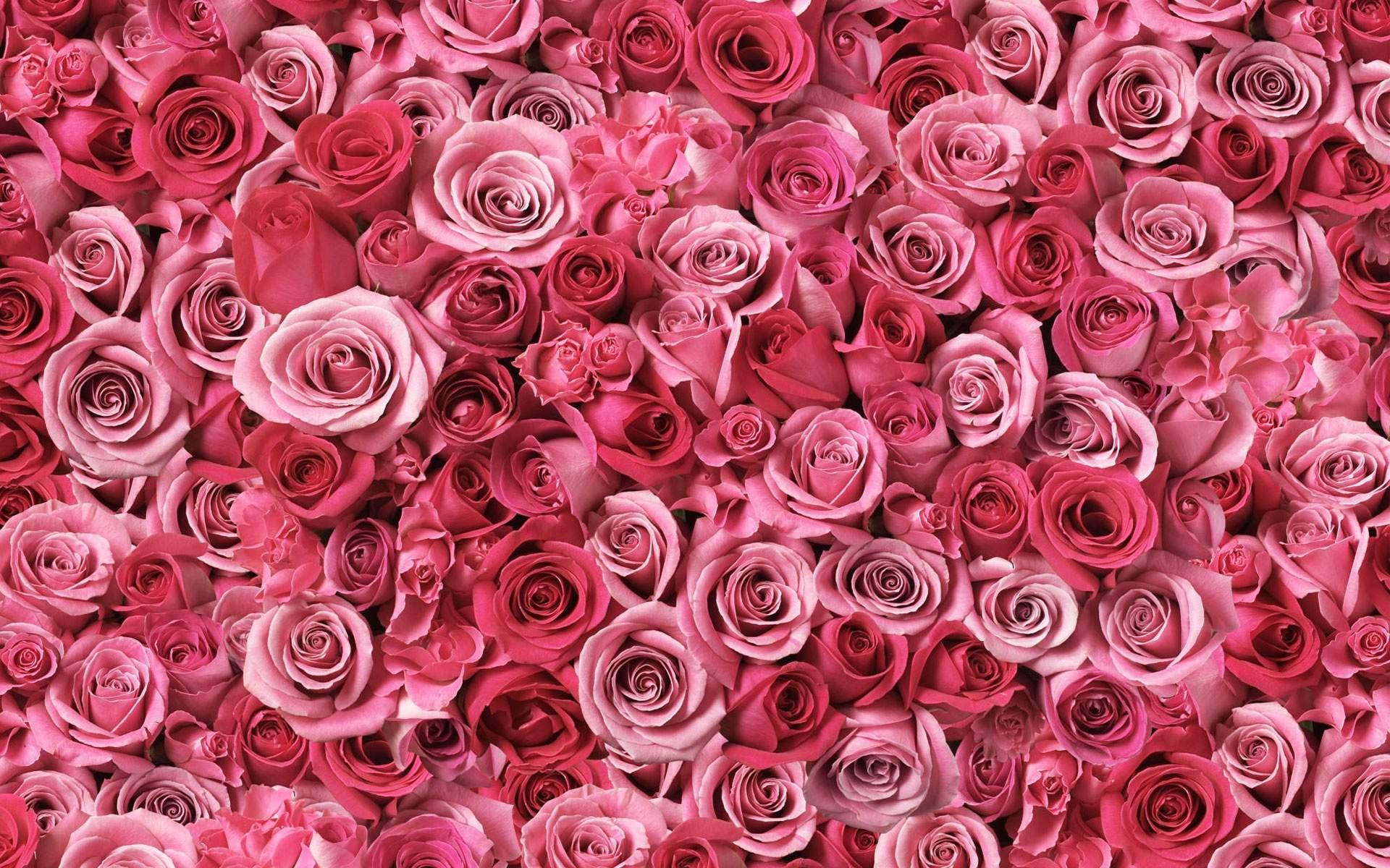 Rose flower wallpapers etamemibawa rose flower wallpapers mightylinksfo Choice Image