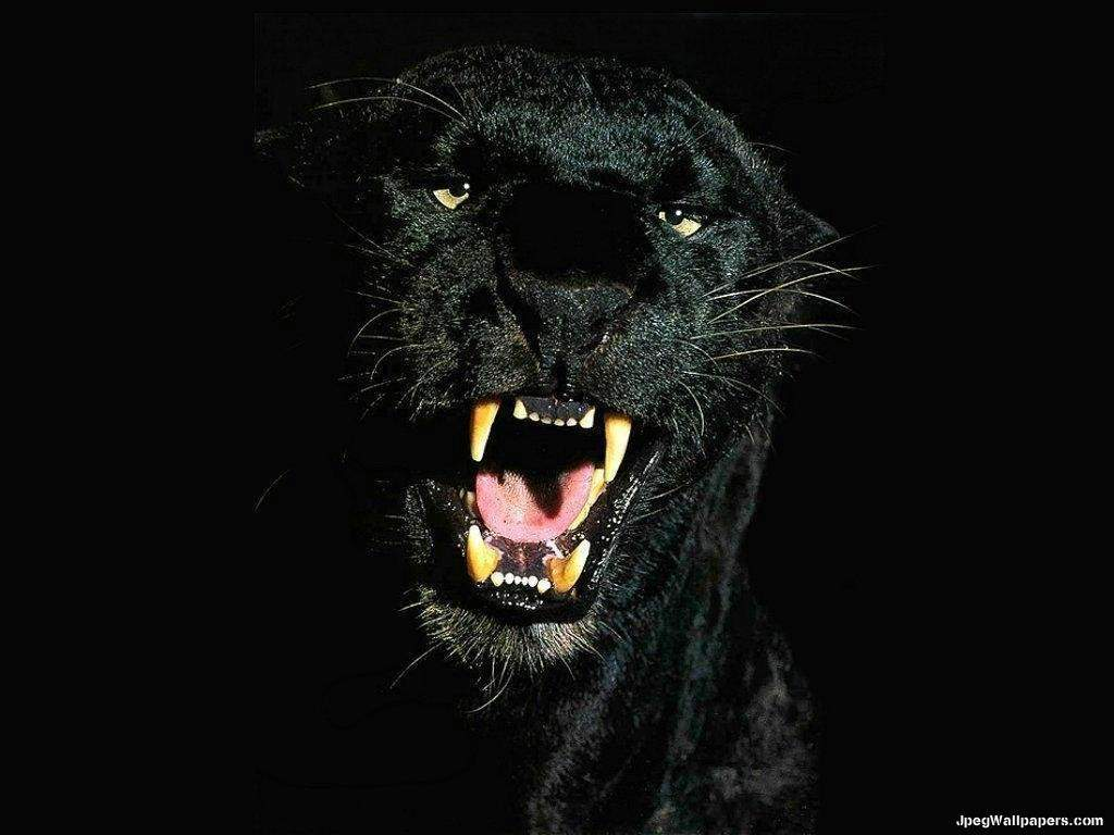black leopard backgrounds - photo #28