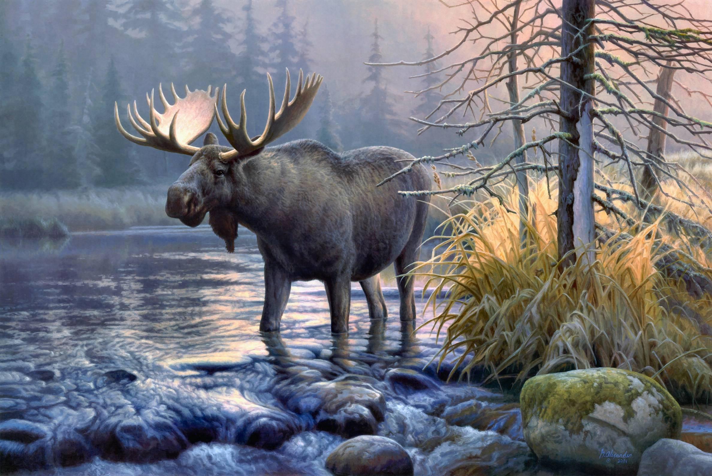 Moose Wallpapers   Wallpaper Cave