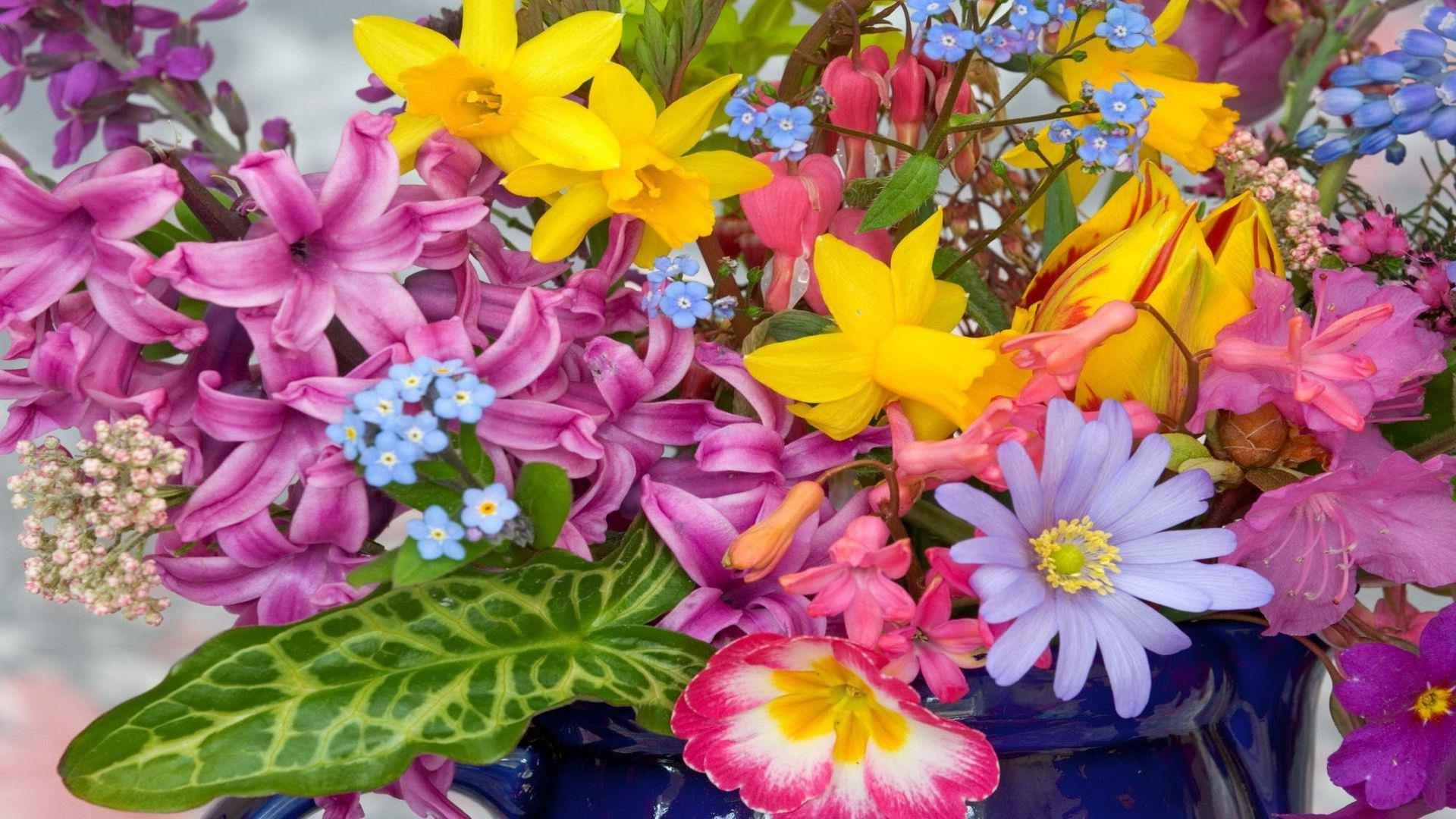 Colorful Flowers Wallpapers - Wallpaper Cave