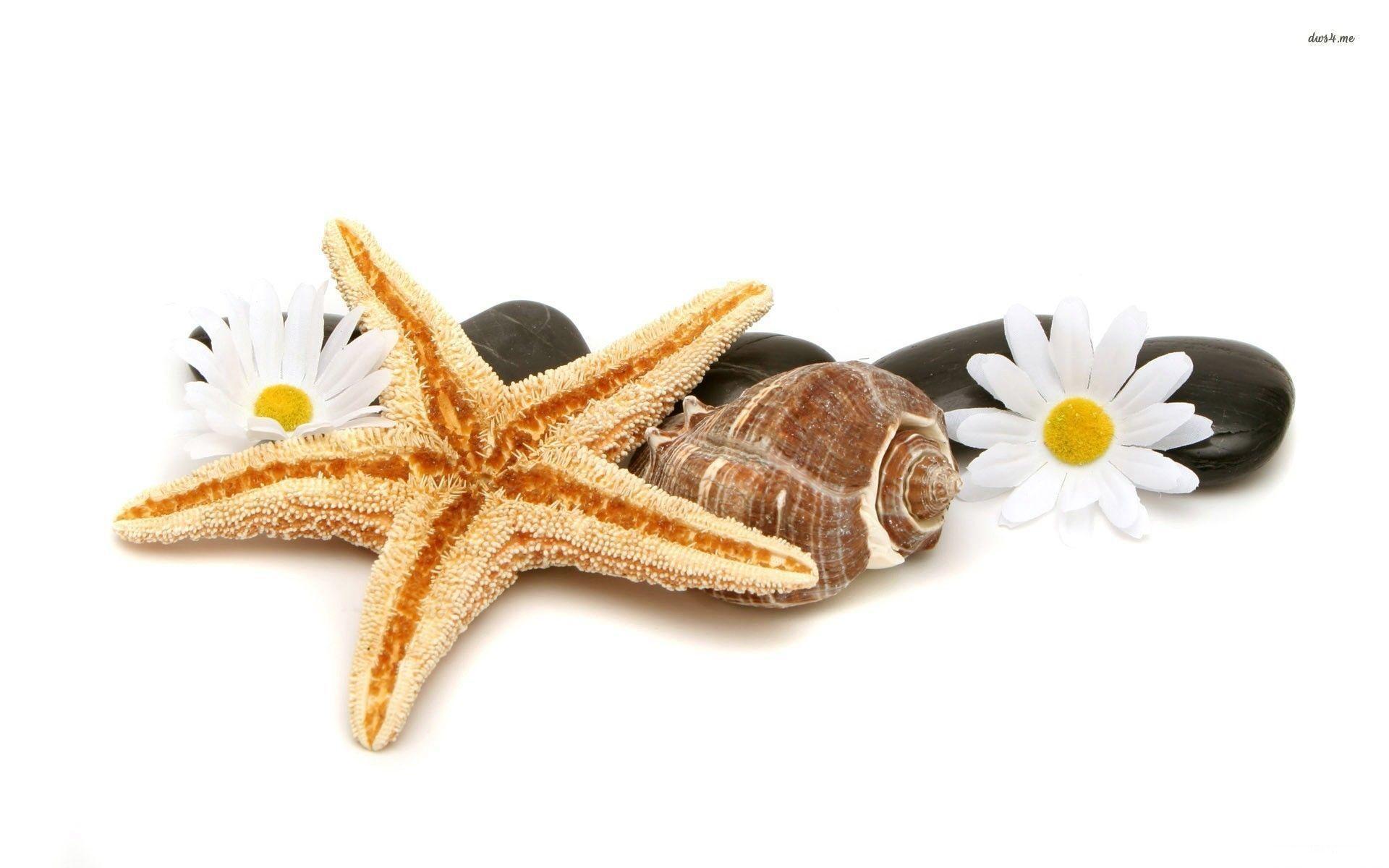Sea Shells Wallpapers Wallpaper Cave HD Wallpapers Download Free Images Wallpaper [1000image.com]