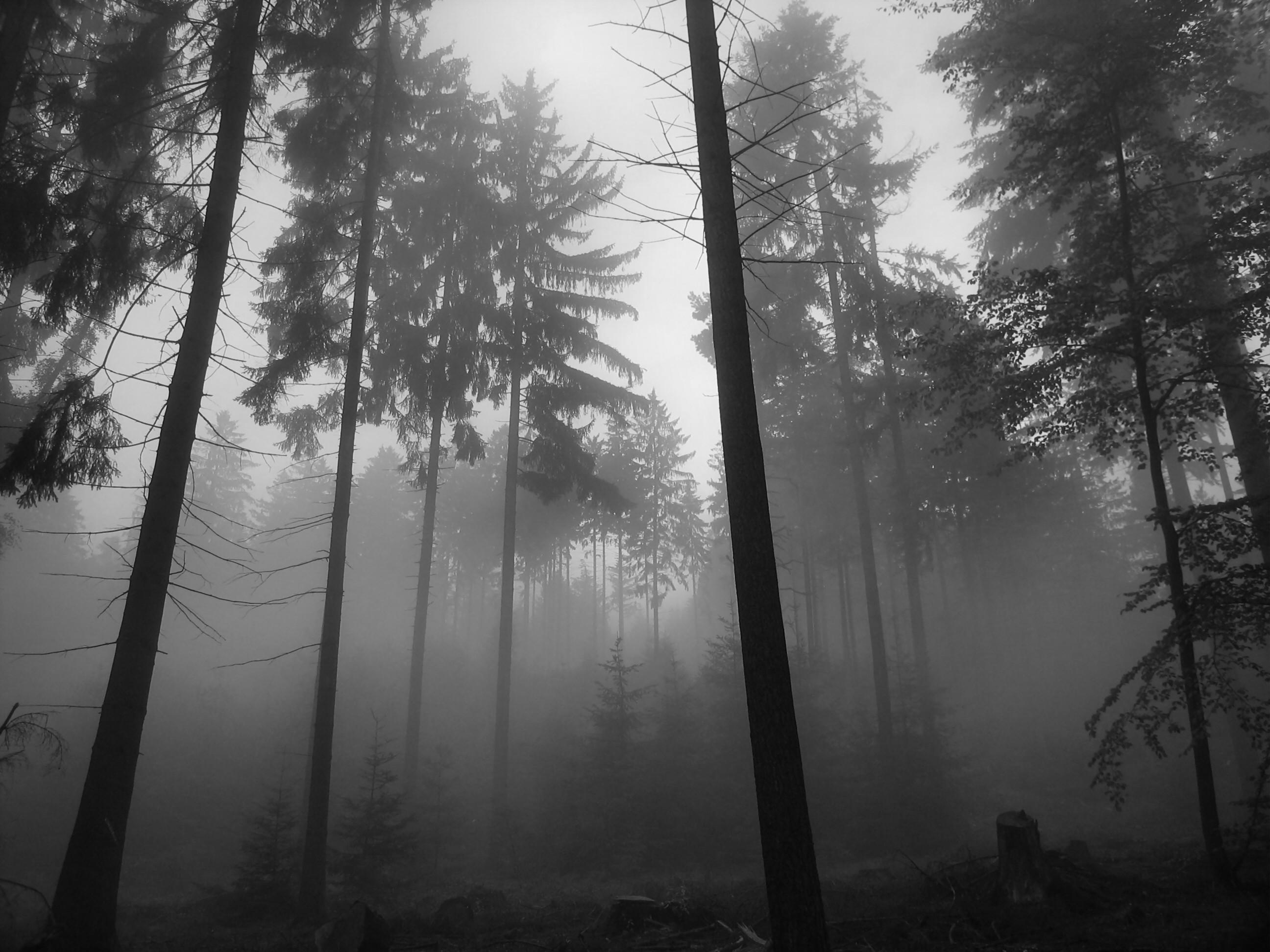 Dark Forest Grayscale 2150 HD Pictures | The Best HD Picture