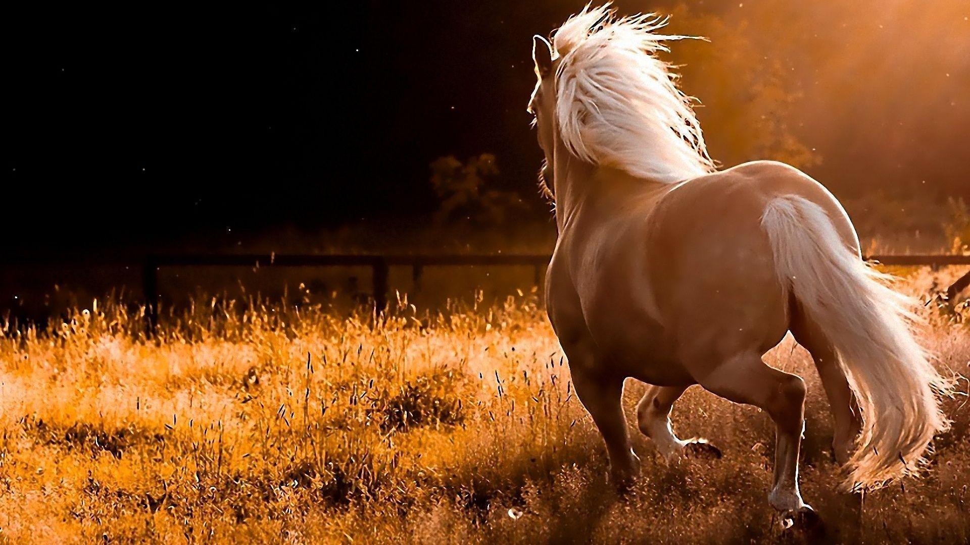 white running horse desktop background desktop backgrounds hq