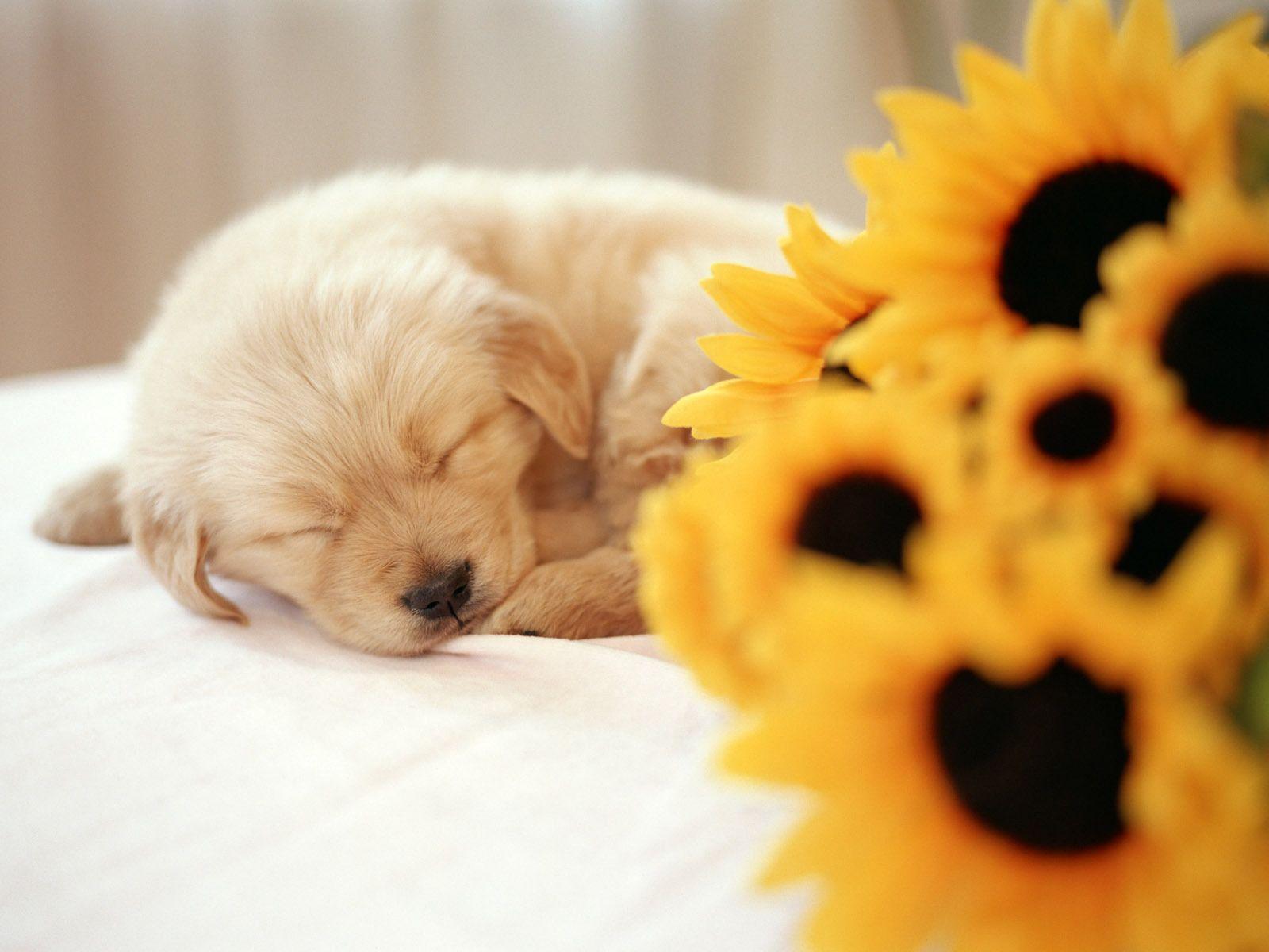 So cute puppies wallpaper 15897245 fanpop - So Cute Puppies Wallpaper 14749024 Fanpop