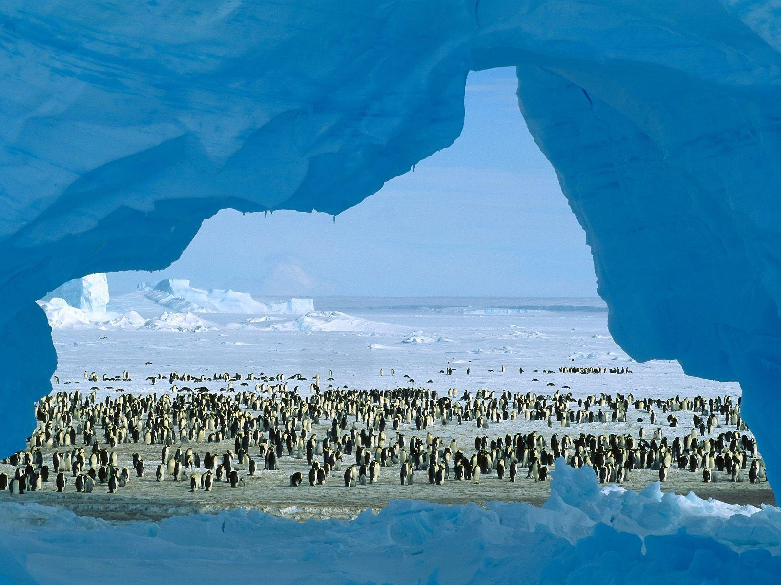 Free HQ Atka Bay Weddell Sea Antarctica Wallpapers