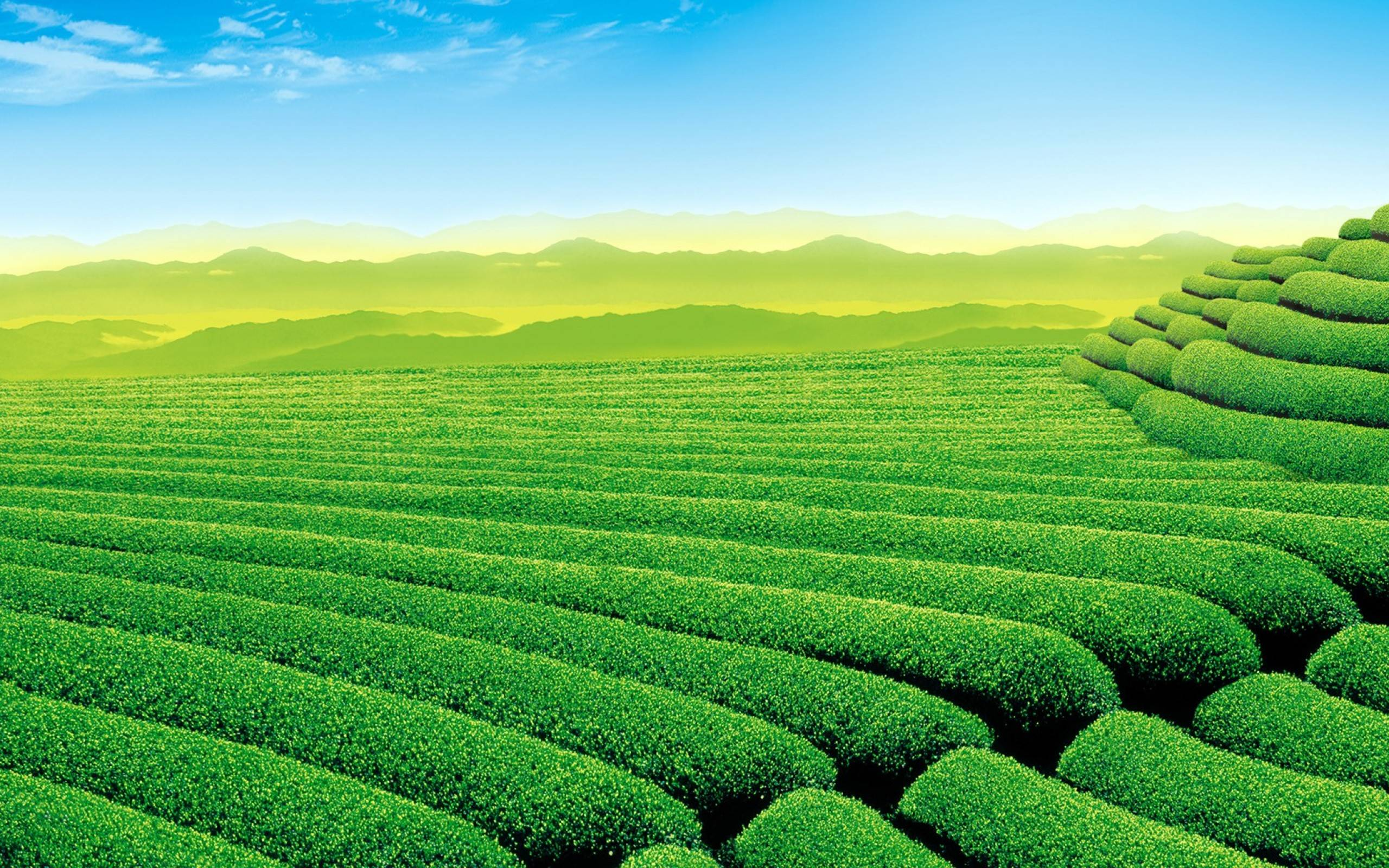 Green Tea Wallpapers Wallpaper Cave