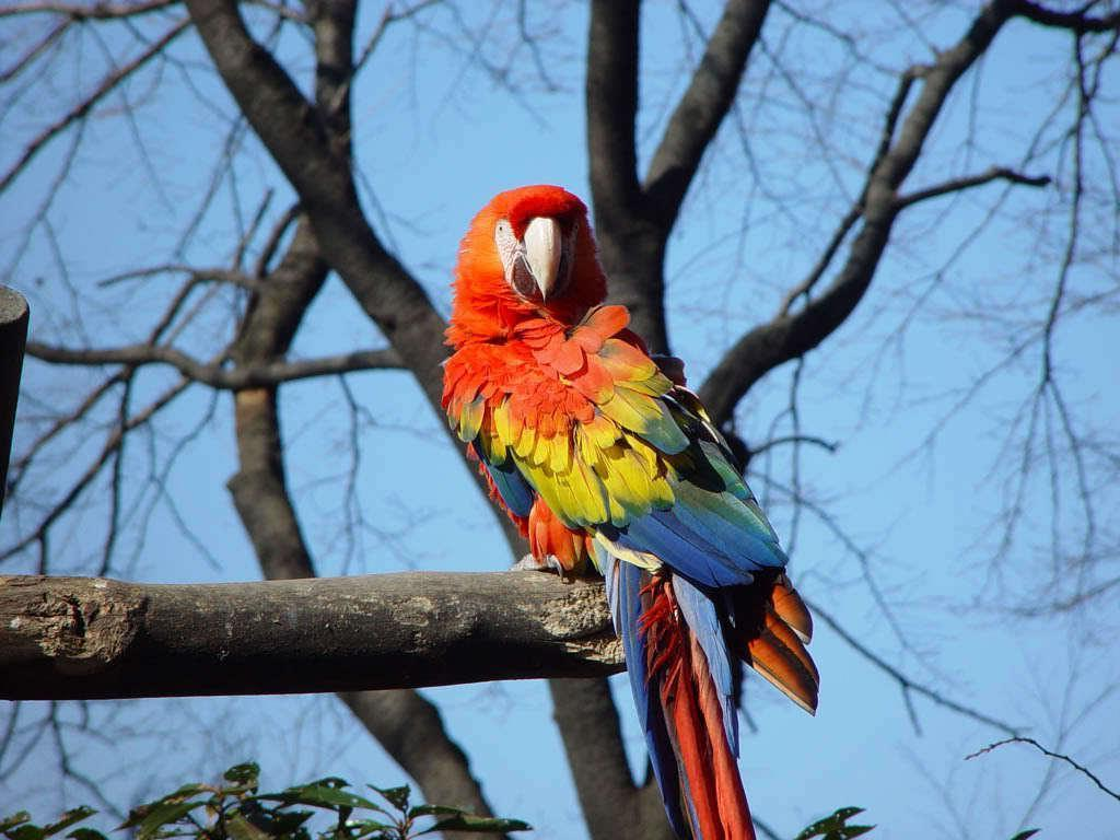 Scarlet Macaw - cats,parrots and butterflies Wallpaper (22883156 ...
