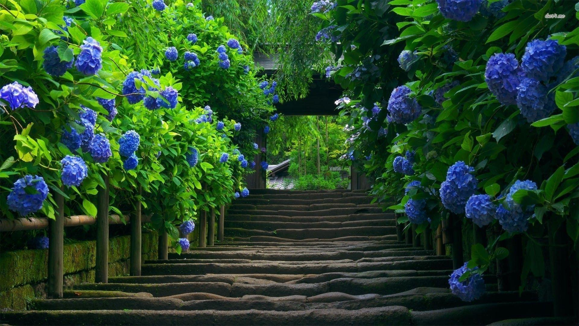 Hydrangea wallpapers wallpaper cave for Anvica homes 3d wallpaper