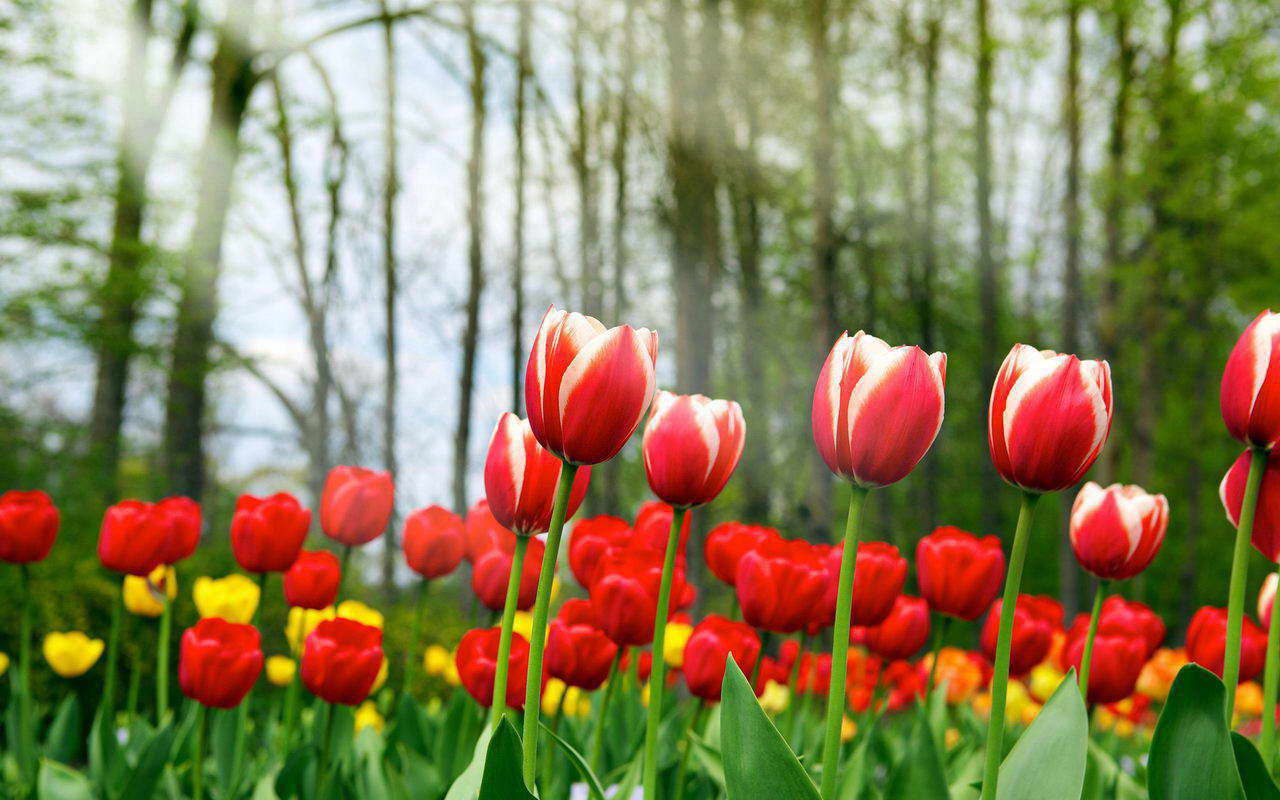 Flower Bouquet Pictures Free Download