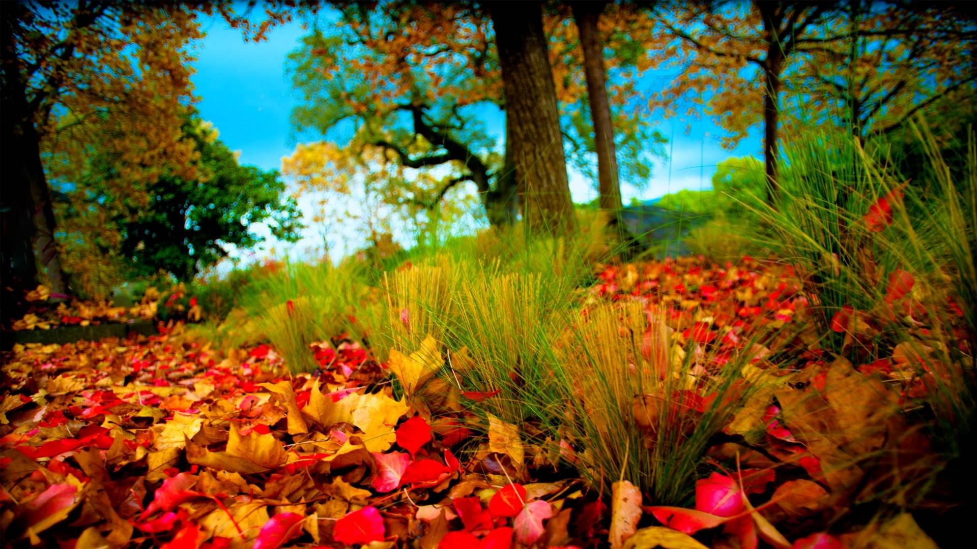Hd wallpaper wap - Fall Hd Wallpapers 1080p Hd Wallpapers Inn
