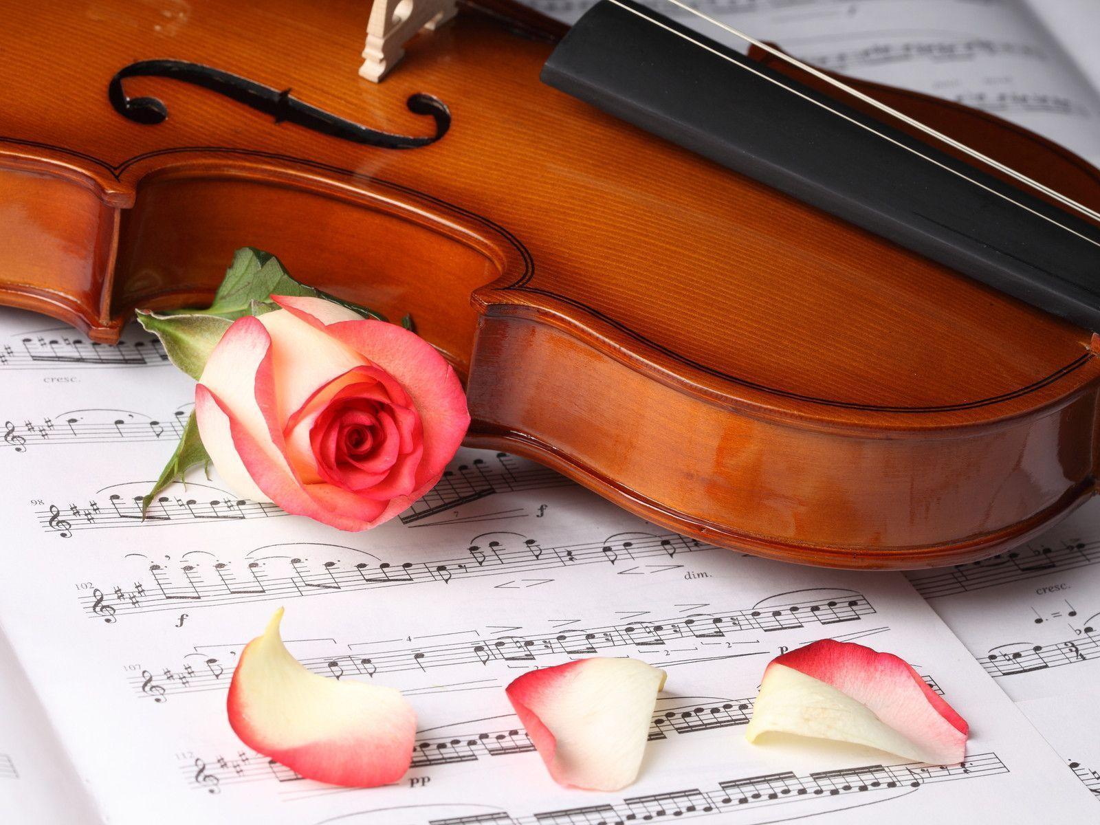 Rose Flower And Violin Wallpaper Free Download #6442 Wallpaper ...