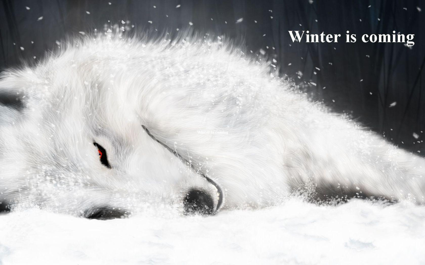 White Wolf widescreen wallpapers