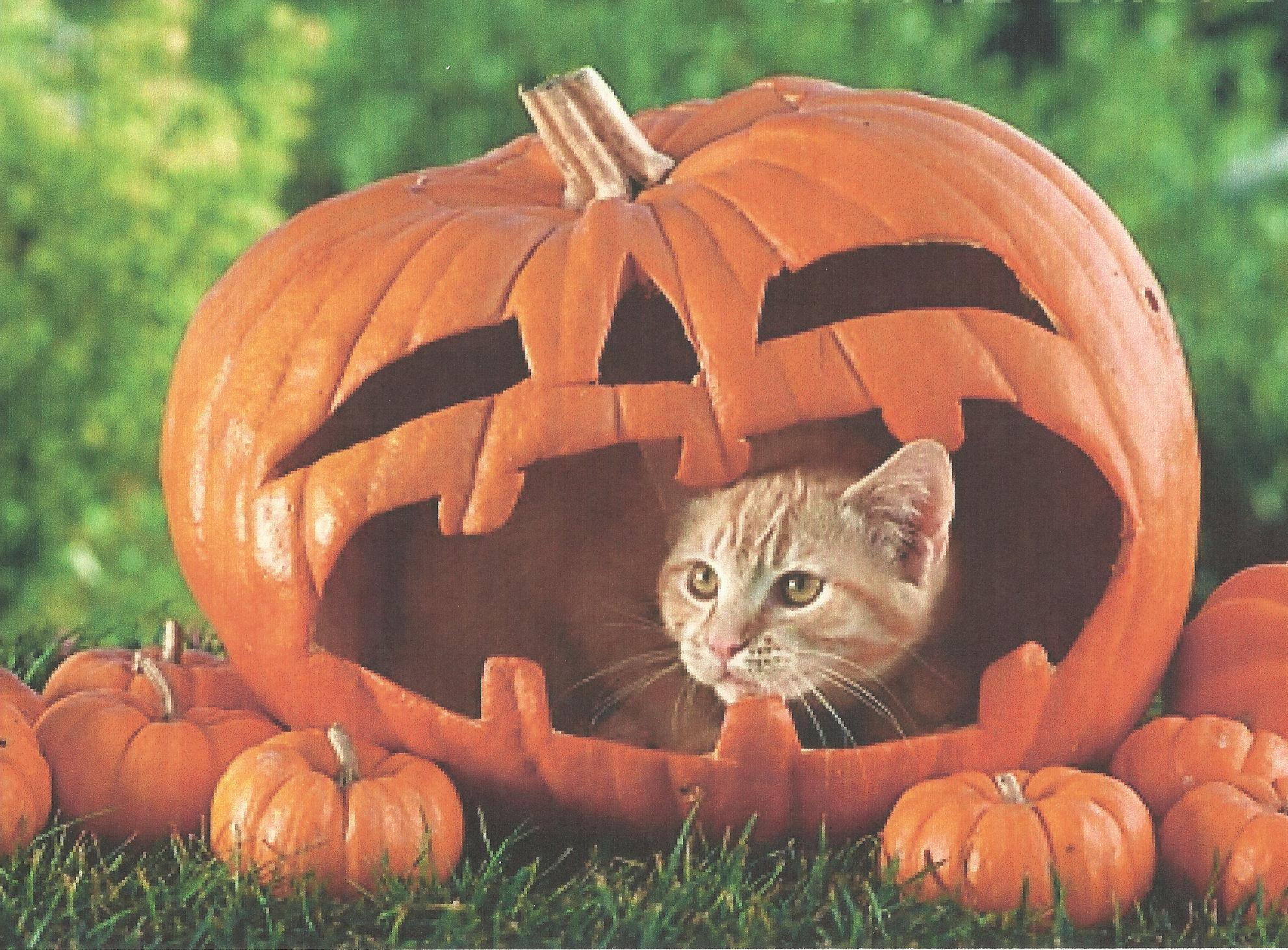 HD Funny Halloween Cat Wallpaper