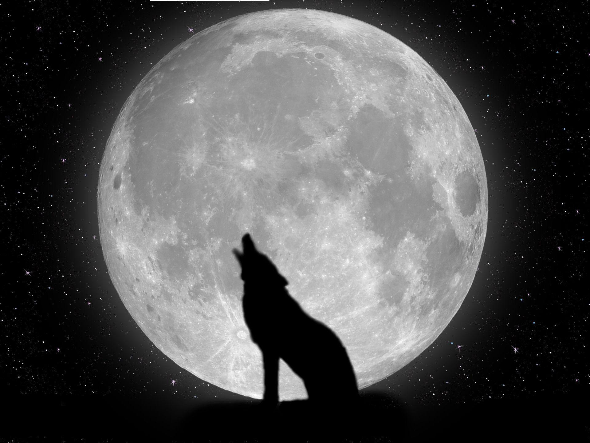 Cool Wolf Backgrounds - Wallpaper Cave