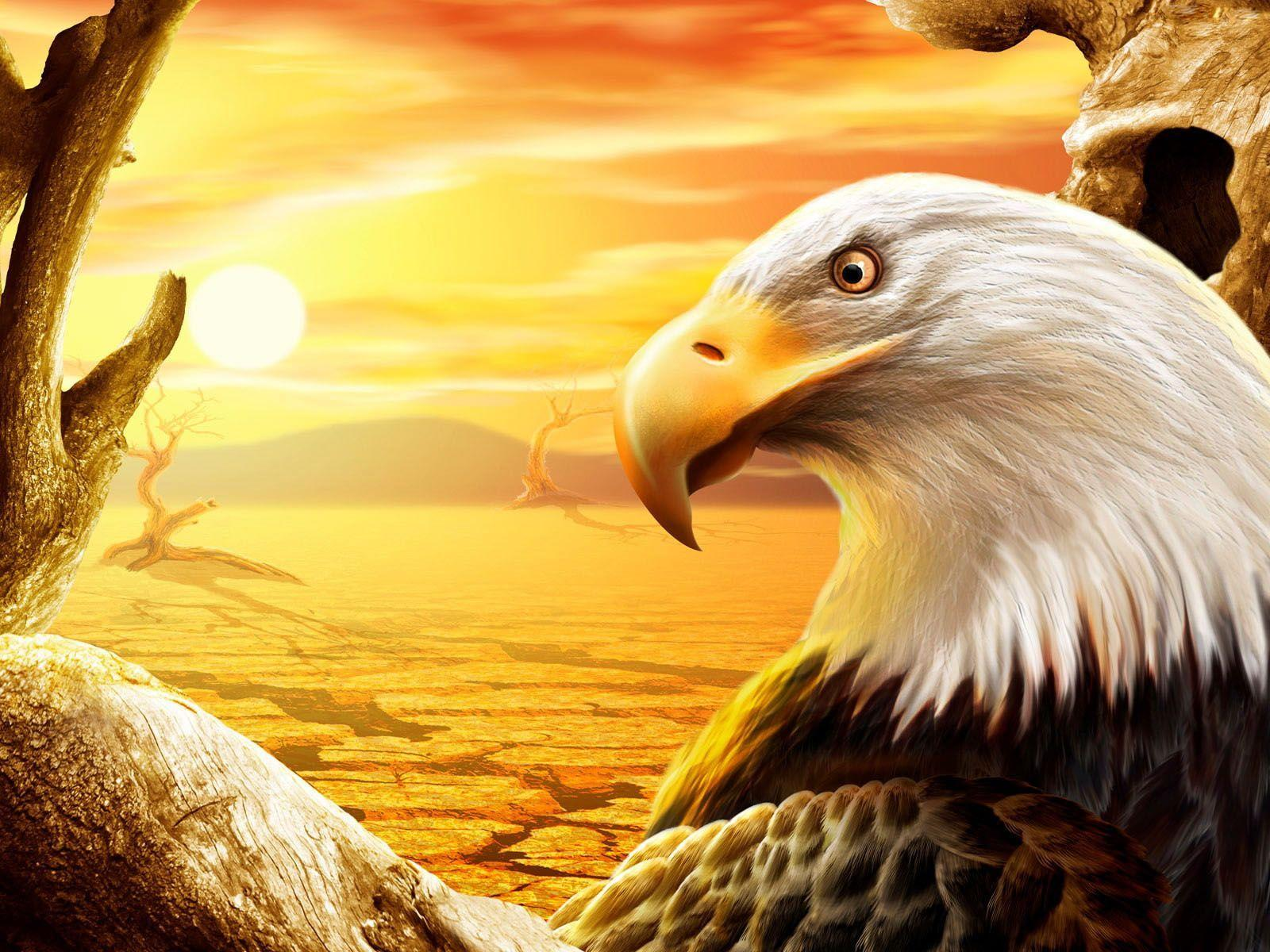free eagle wallpapers wallpaper caveeagle wallpapers hd wallpapers inn