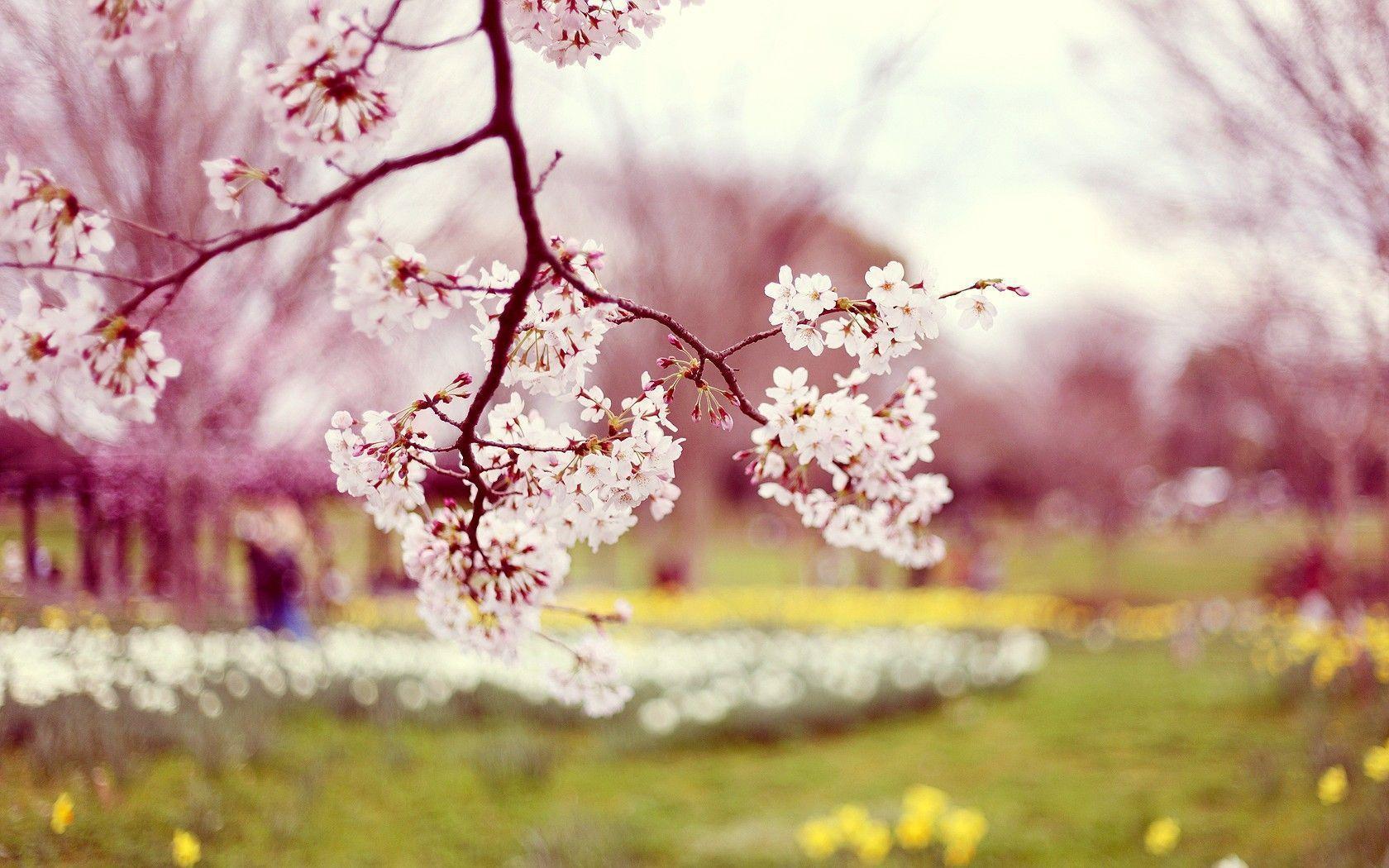 Flowers Spring Season Wallpaper Desktop 12338