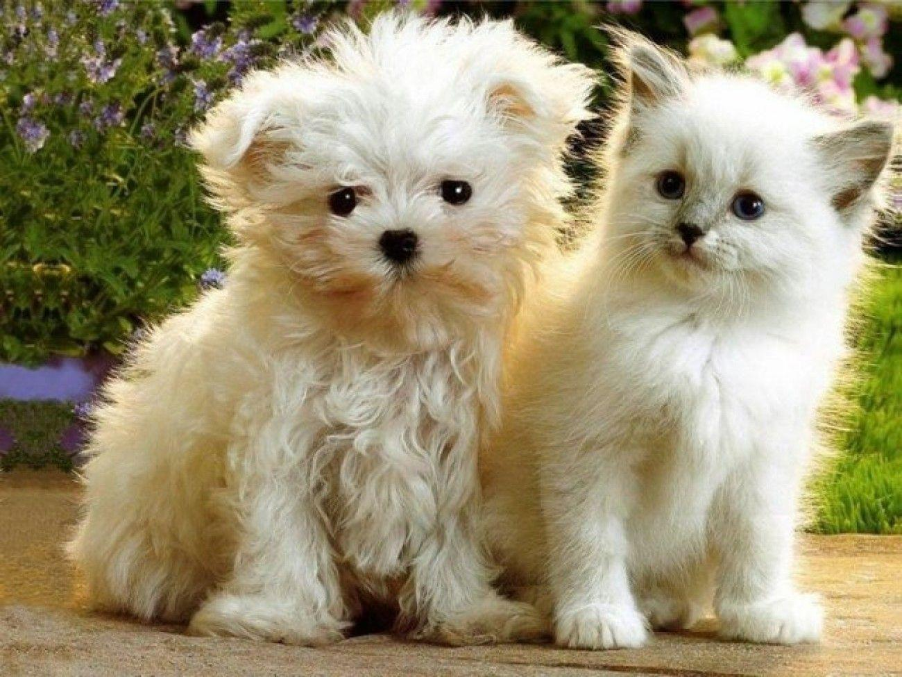 Adorable Puppies And Kittens Image & Pictures