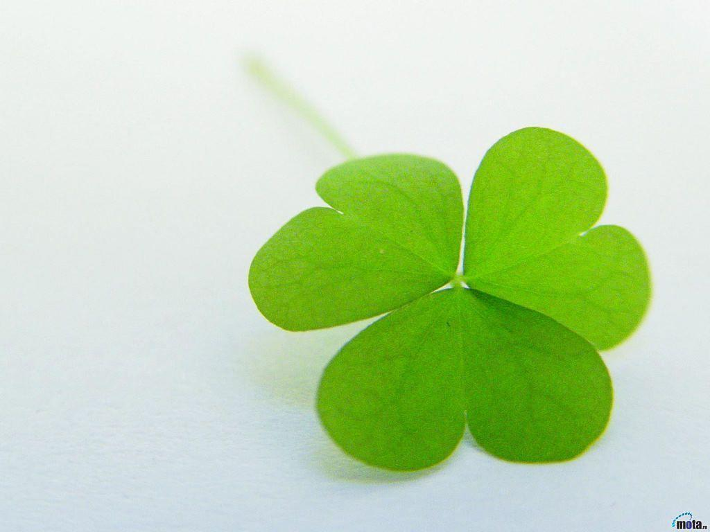 Pix For > Irish Four Leaf Clover Wallpapers