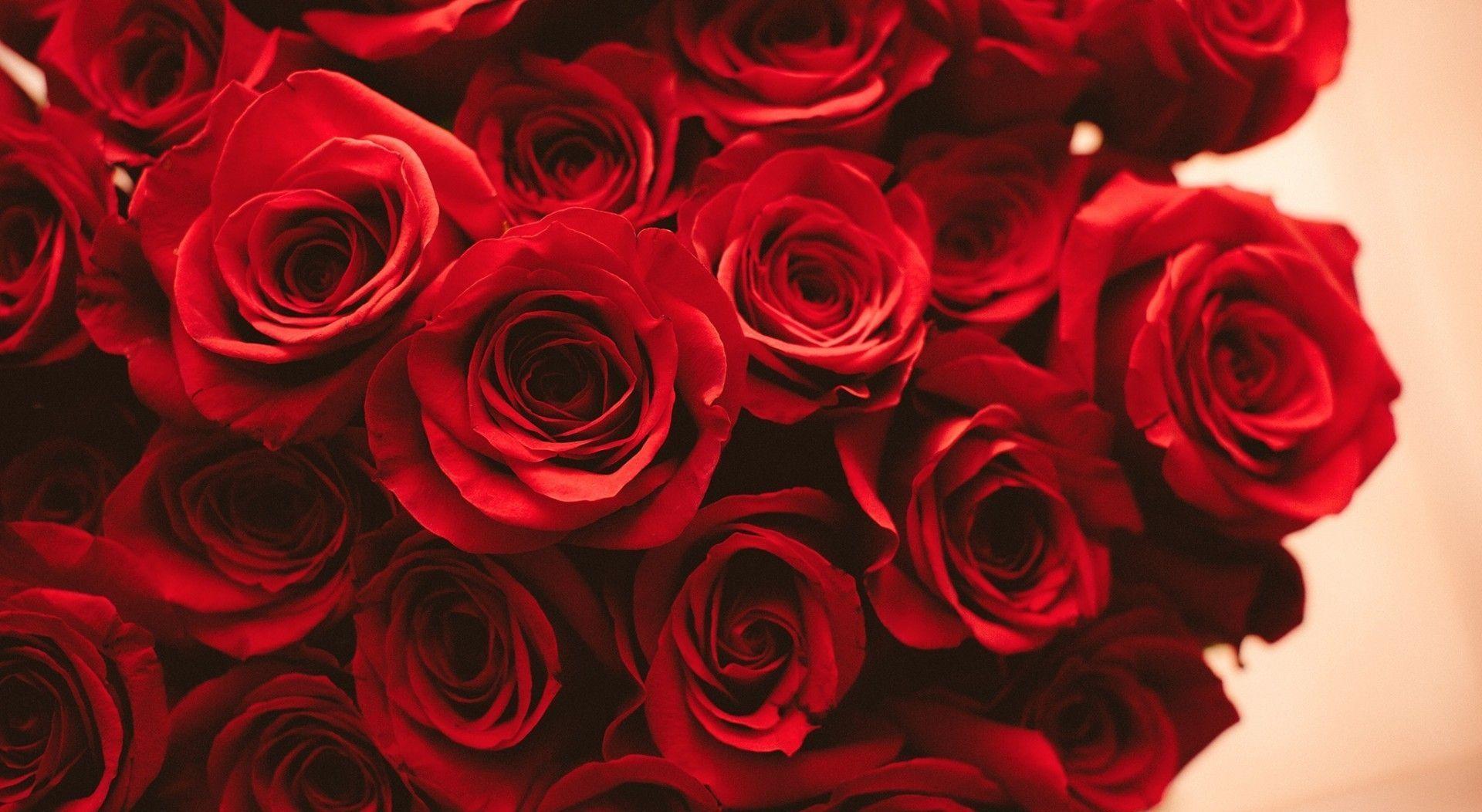 Red Rose Desktop Wallpapers - Wallpaper Cave