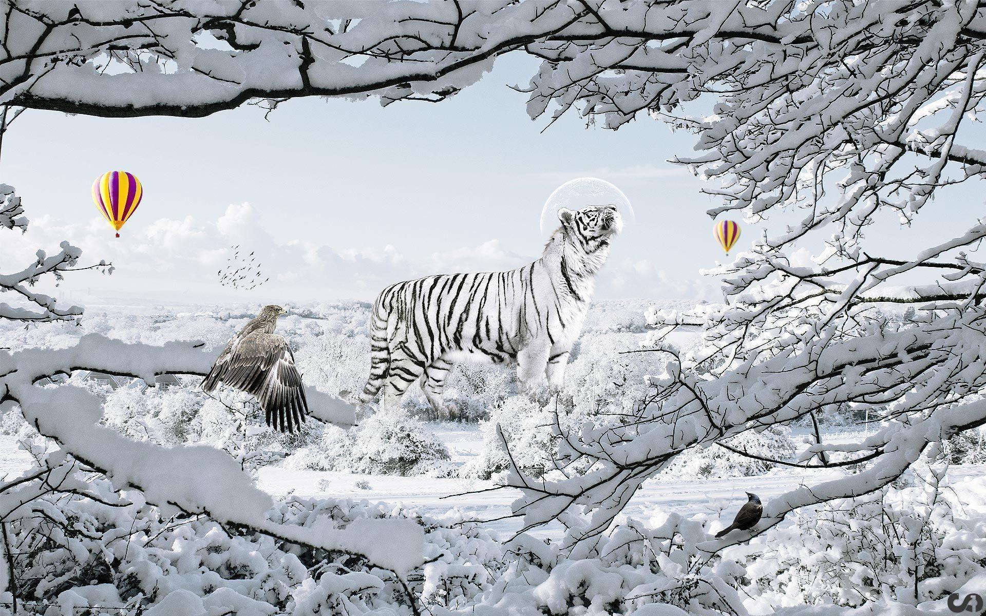 tiger wallpaper widescreen - photo #36