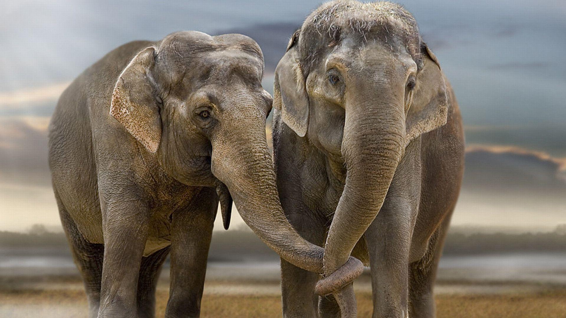 Wallpaper download elephant - Cute Elephant Desktop Wallpaper Pics Free Download Lashwallpapers