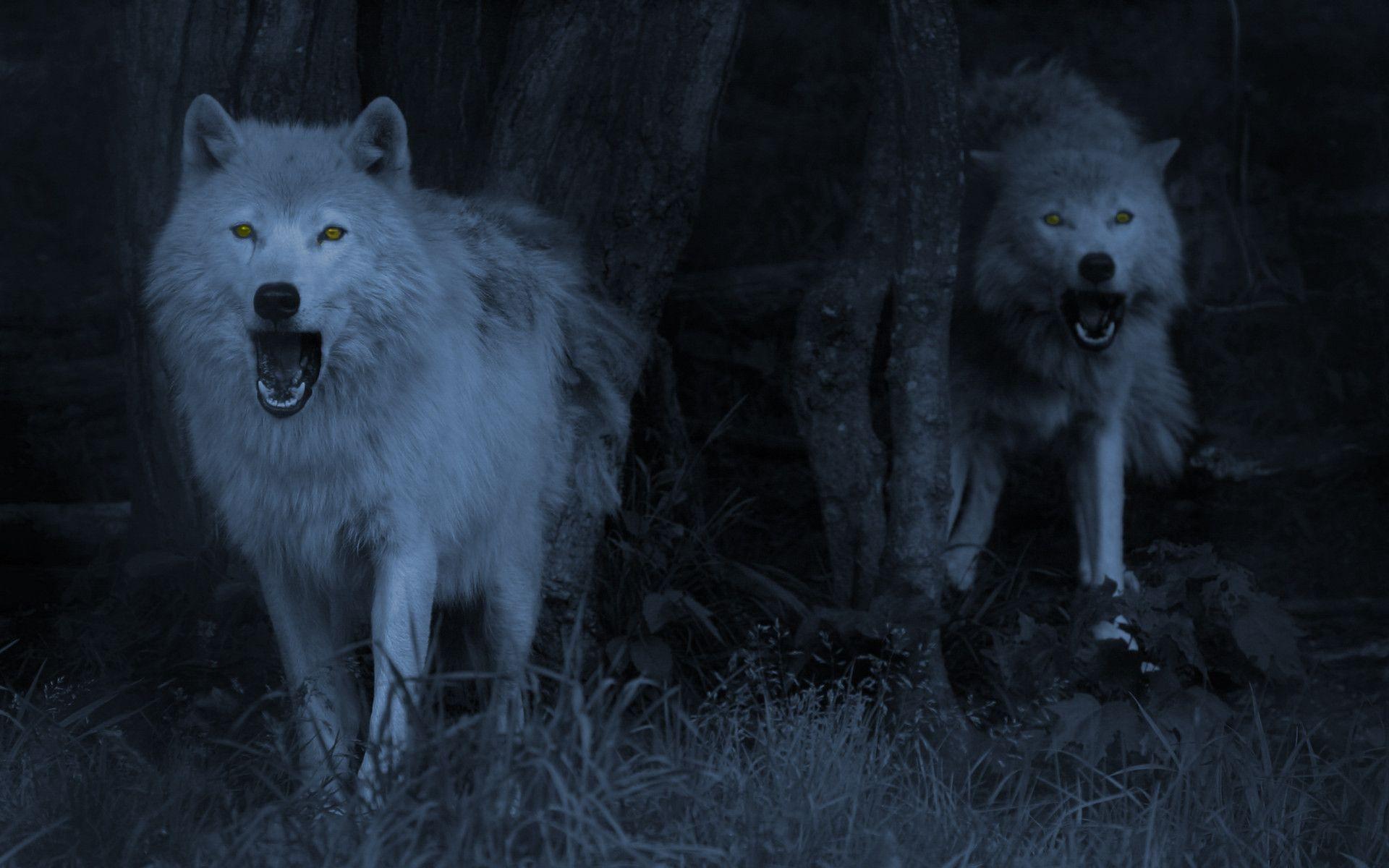 Wolf Wallpapers Desktop - Wallpaper Cave