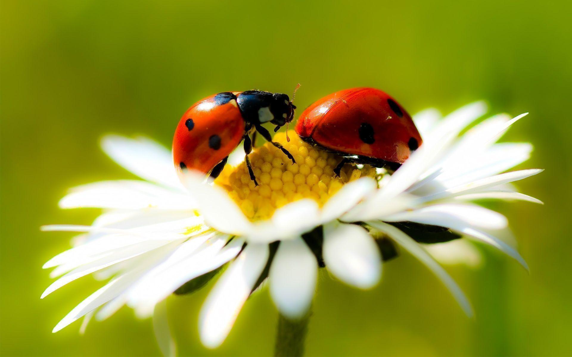 Ladybug Wallpapers - Wallpaper Cave