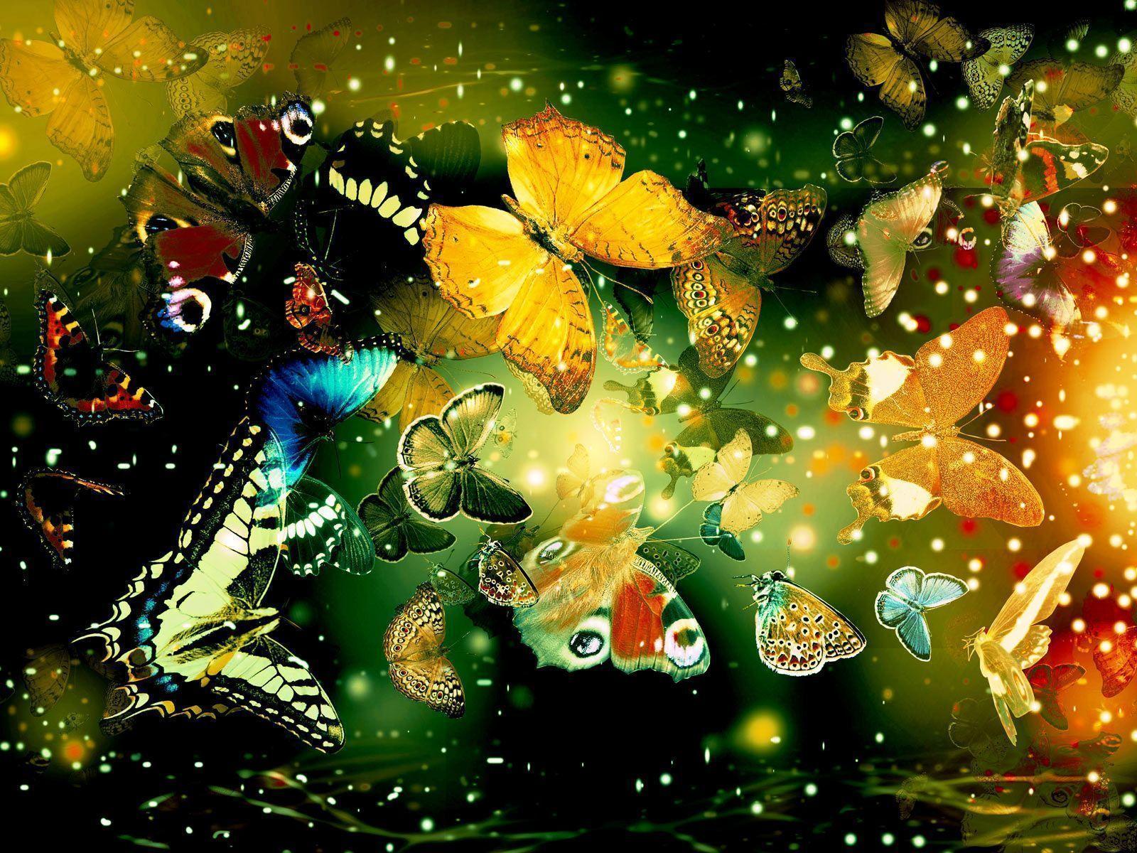 Butterflies Hd Wallpapers | Wallpapers Top 10