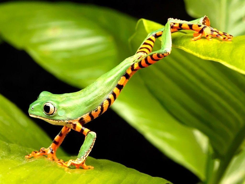 striped chameleon wallpaper hd - photo #15