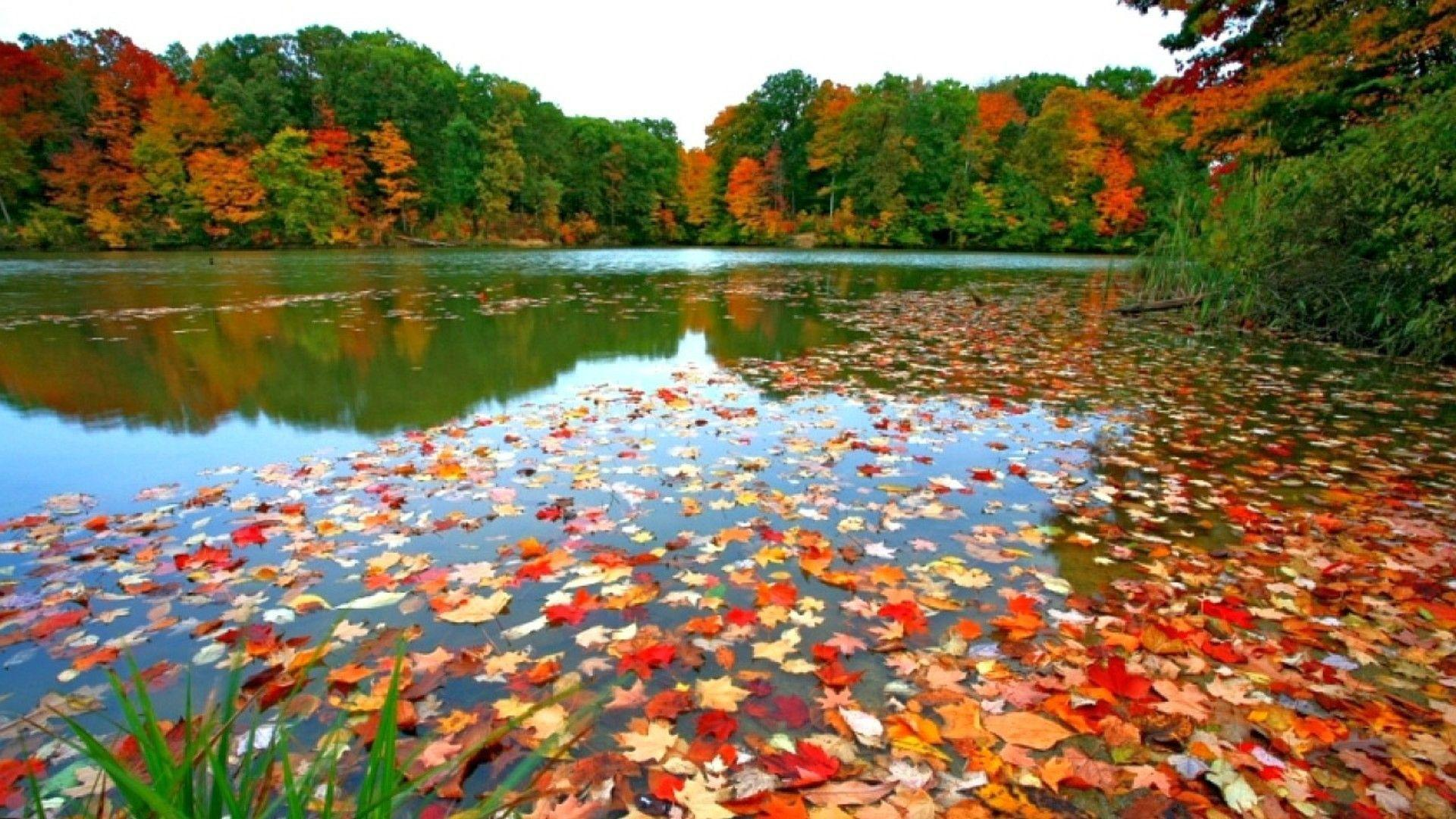 amazing fall foliage wallpapers - photo #19