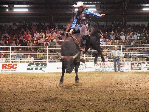 pbr bull riding wallpaper wwwpixsharkcom images