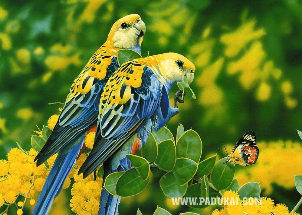 Birds Wallpapers | Where you can download all kind of Beautiful ...