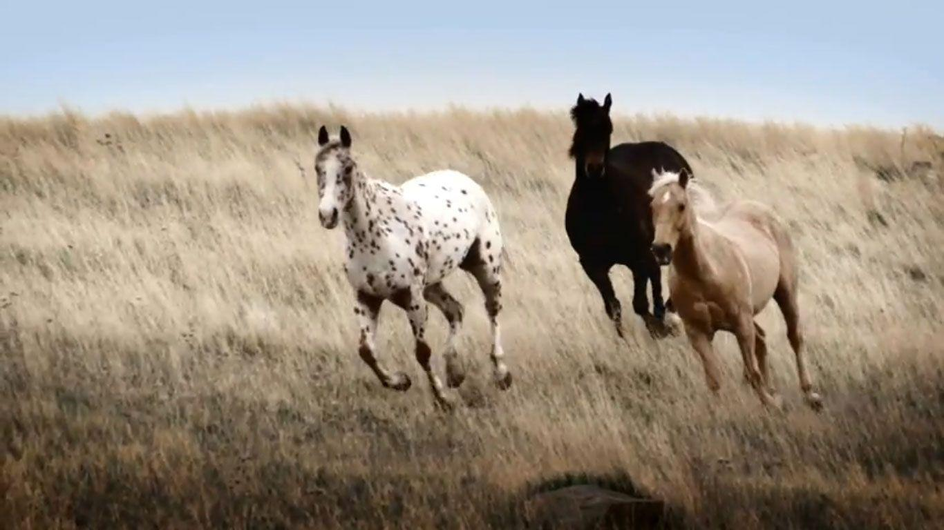 spring wild horse wallpaper - photo #46