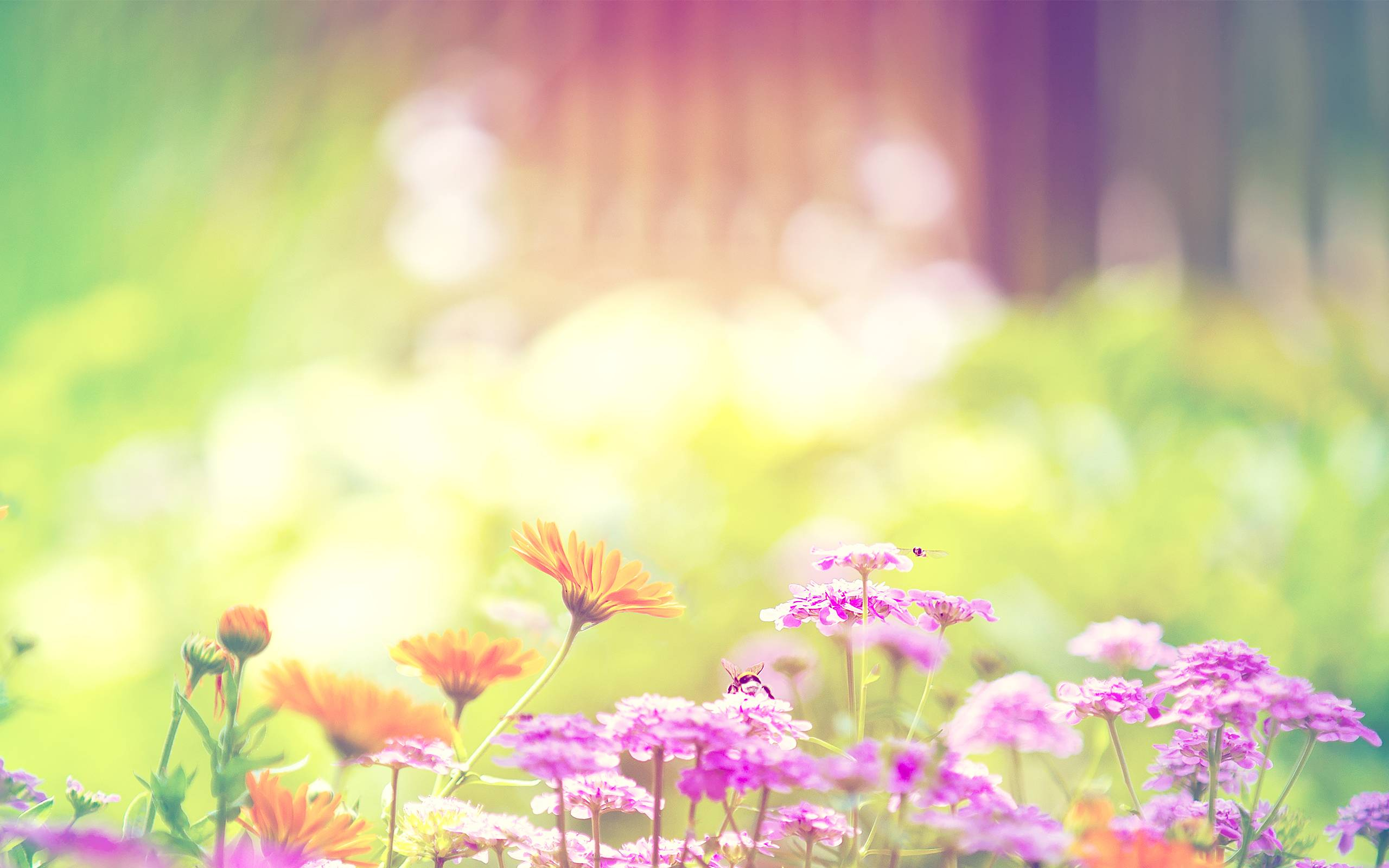 Trendy Desktop Spring Flowers Hd Wallpapers 2560x1600PX ~ Colorful