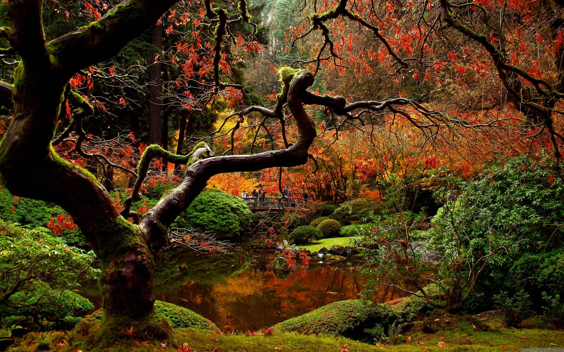Japanese Garden Wallpapers   Full HD Wallpaper Search