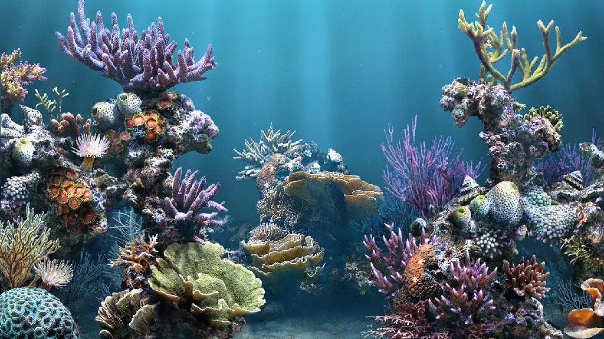 HD Aquarium Backgrounds 1080p