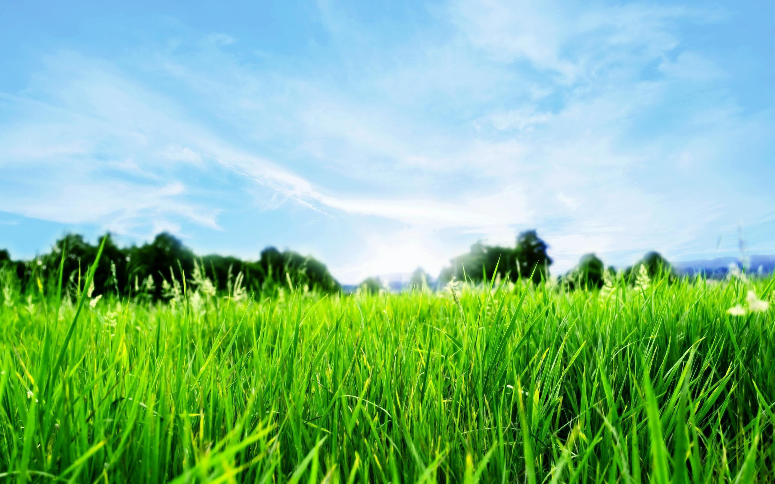 free beautiful nature green - photo #30