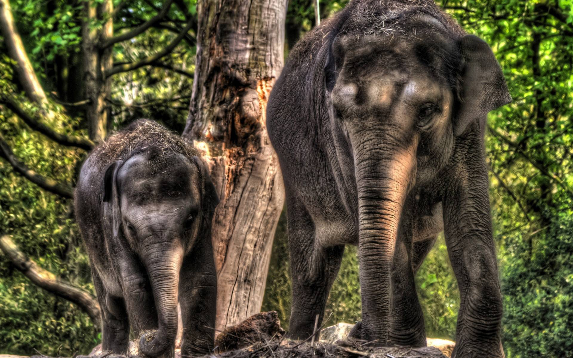 Wallpaper download elephant - Wallpapers For Baby Elephant Wallpaper