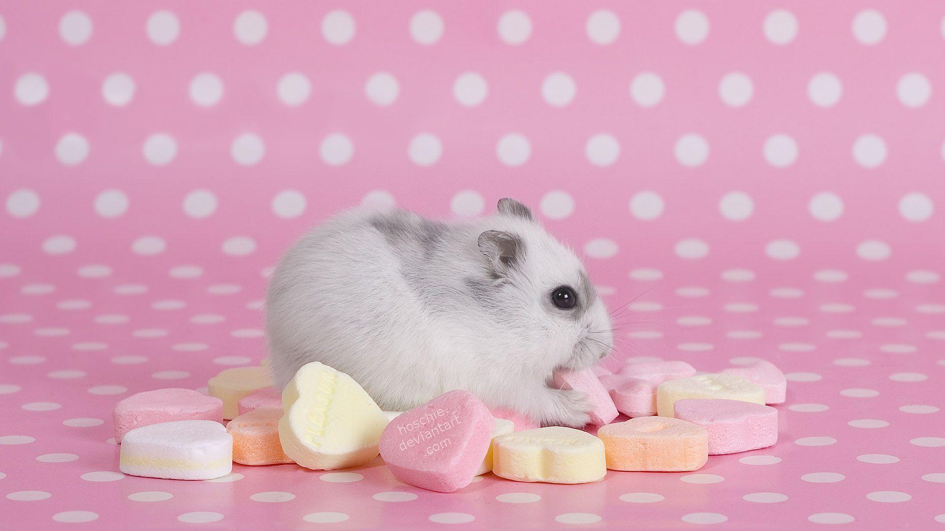 Cute Hamster Photo