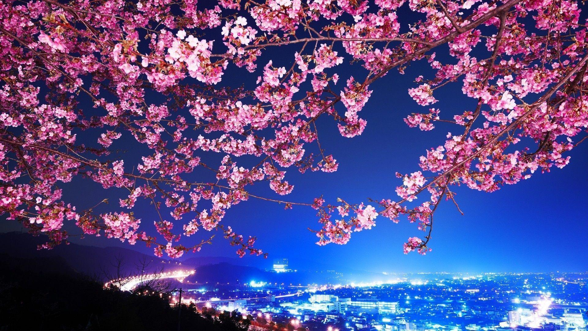 Hd Wallpapers Tags Cherry Blossom Tree With Path And Building ...