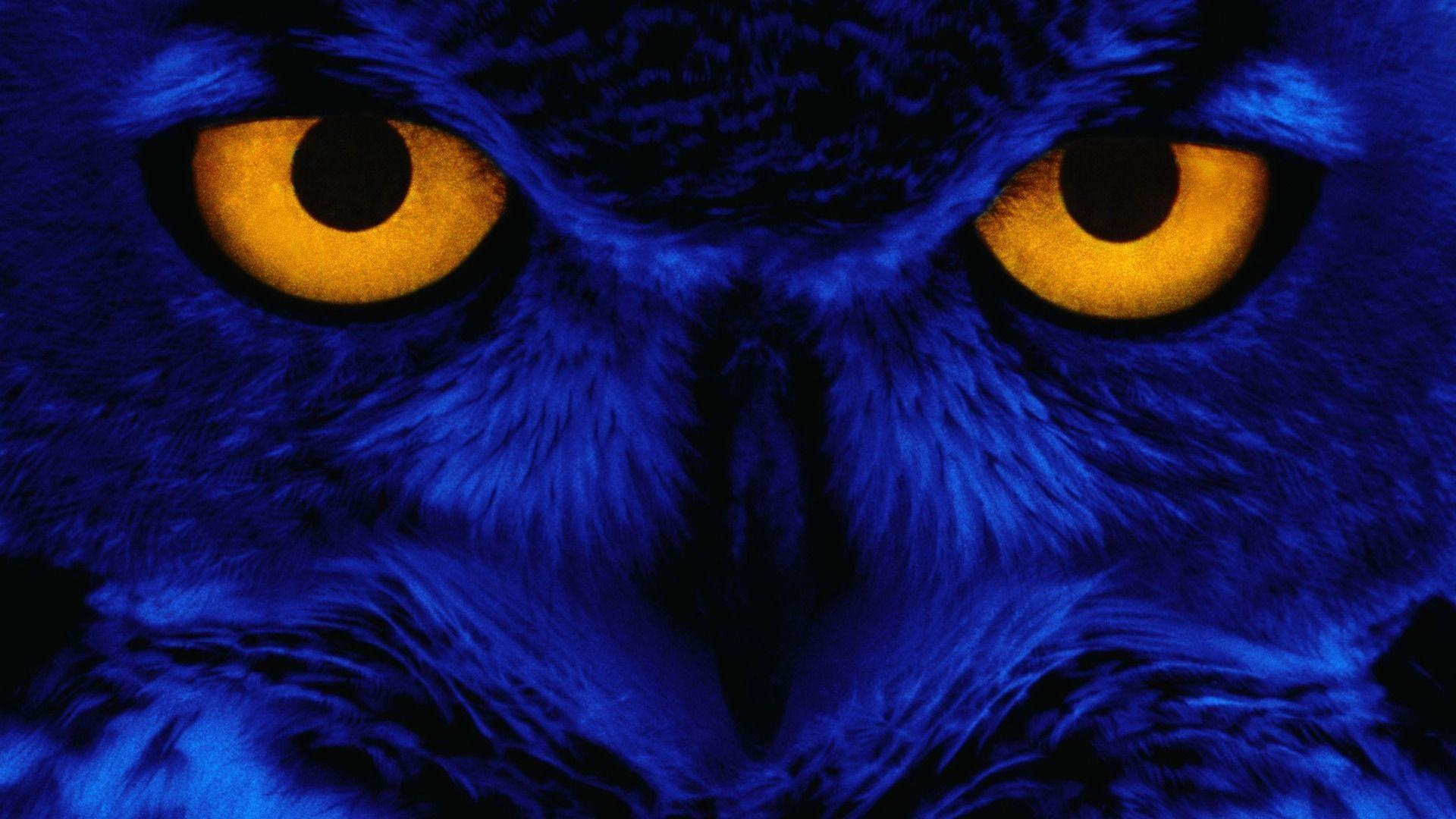owl wallpaper | owl wallpaper - Part 3